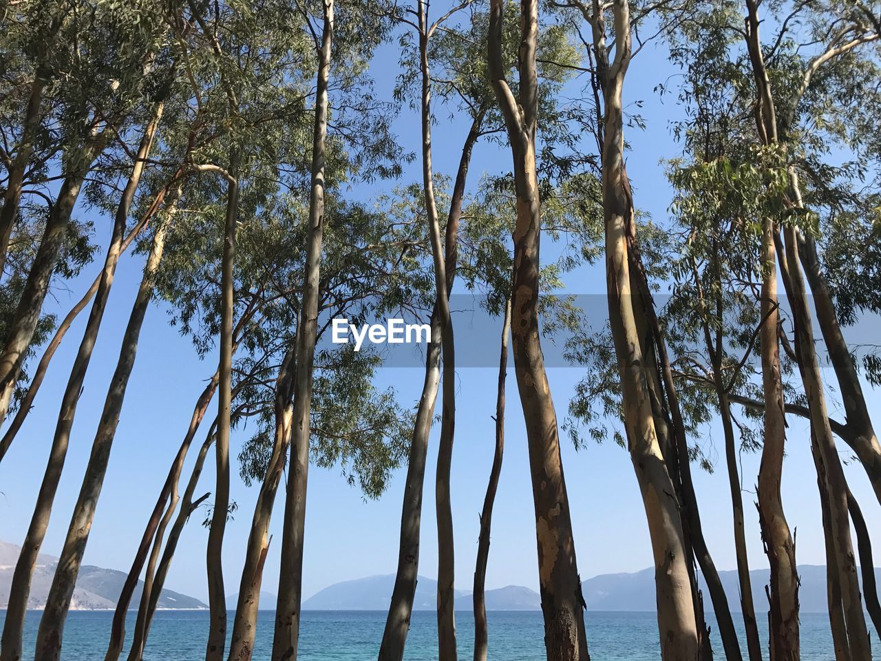 tree, nature, scenics, beauty in nature, tranquility, tranquil scene, day, sea, outdoors, no people, branch, tree trunk, low angle view, growth, water, sky, blue, horizon over water