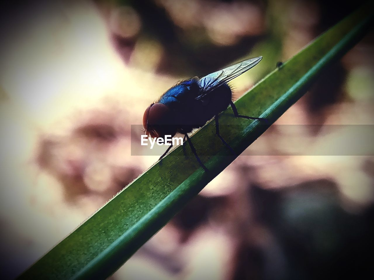 insect, invertebrate, animals in the wild, animal themes, animal wildlife, focus on foreground, animal, close-up, green color, one animal, leaf, plant part, nature, day, no people, animal wing, damselfly, outdoors, plant, selective focus, blade of grass