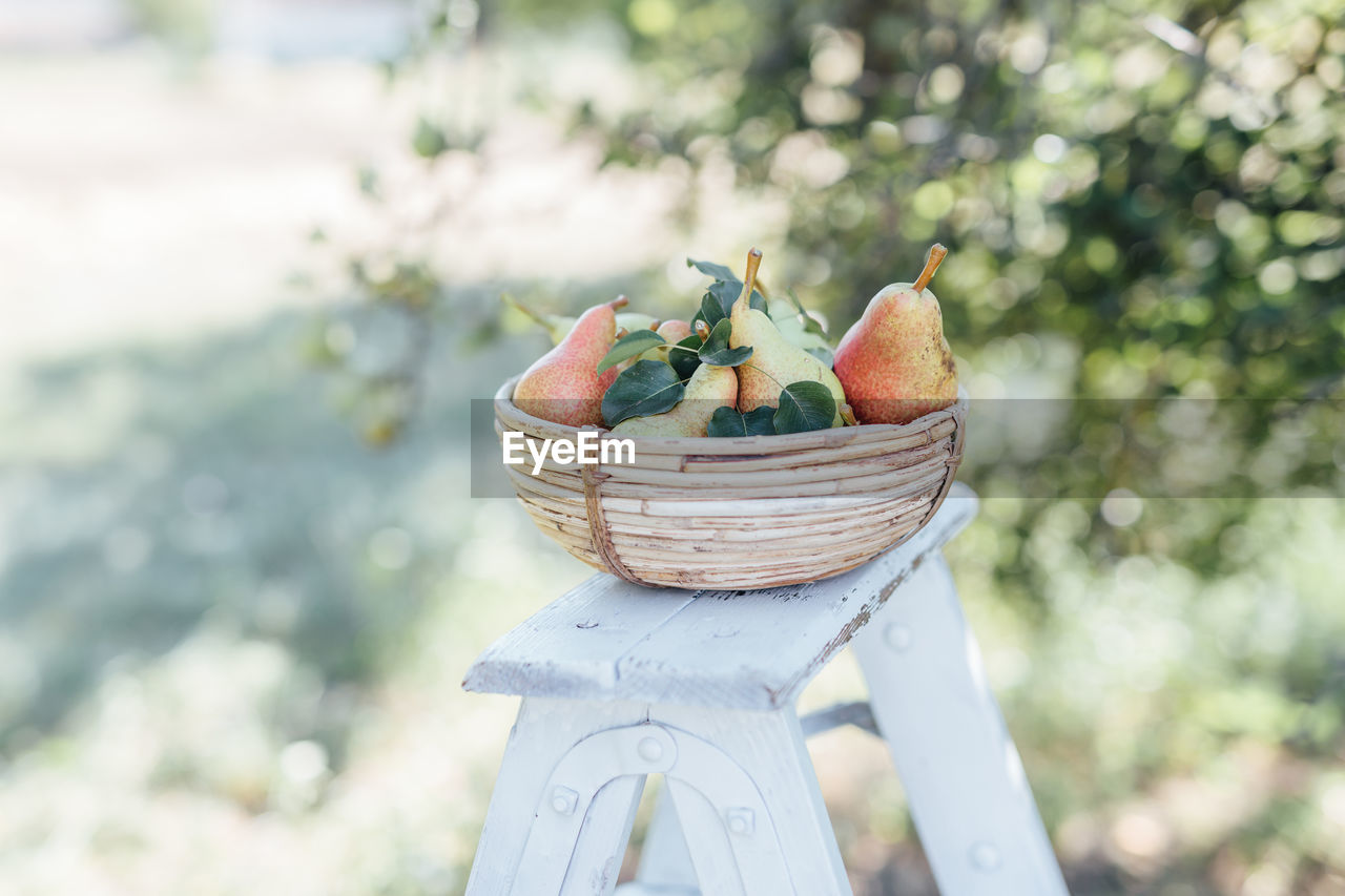 food and drink, healthy eating, food, fruit, focus on foreground, basket, freshness, wellbeing, day, container, no people, apple - fruit, nature, close-up, outdoors, still life, plant, selective focus, front or back yard, table, ripe