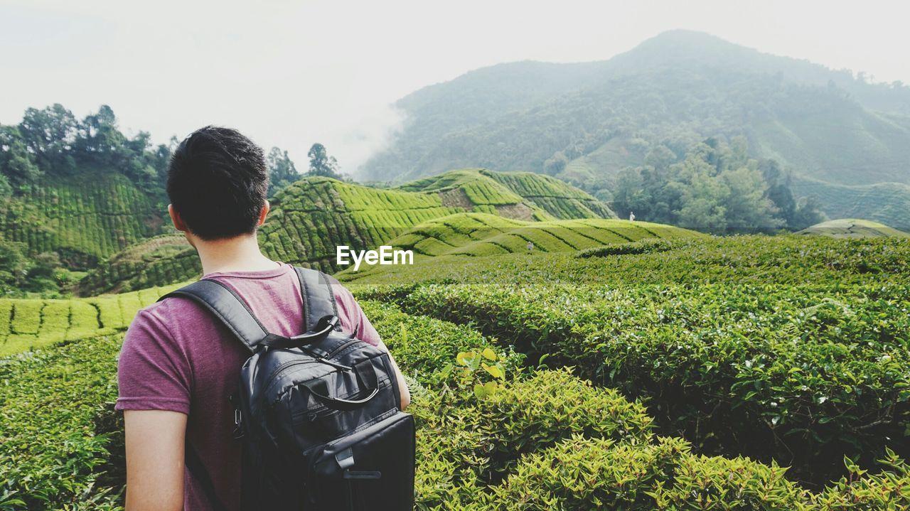 Rear view of man looking at tea plantation