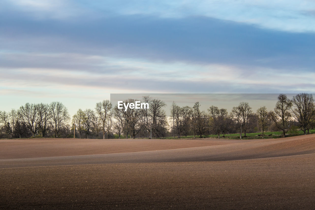 sky, tree, cloud - sky, plant, beauty in nature, no people, tranquility, road, transportation, nature, landscape, tranquil scene, environment, land, scenics - nature, day, field, outdoors, non-urban scene, empty