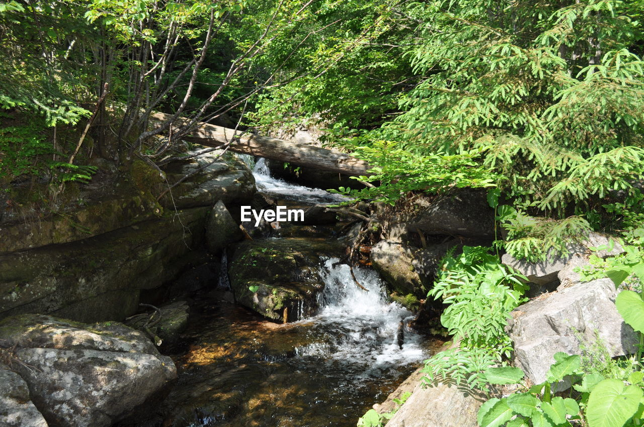 waterfall, nature, forest, rock - object, beauty in nature, river, water, scenics, motion, no people, outdoors, tranquility, tree, plant, day