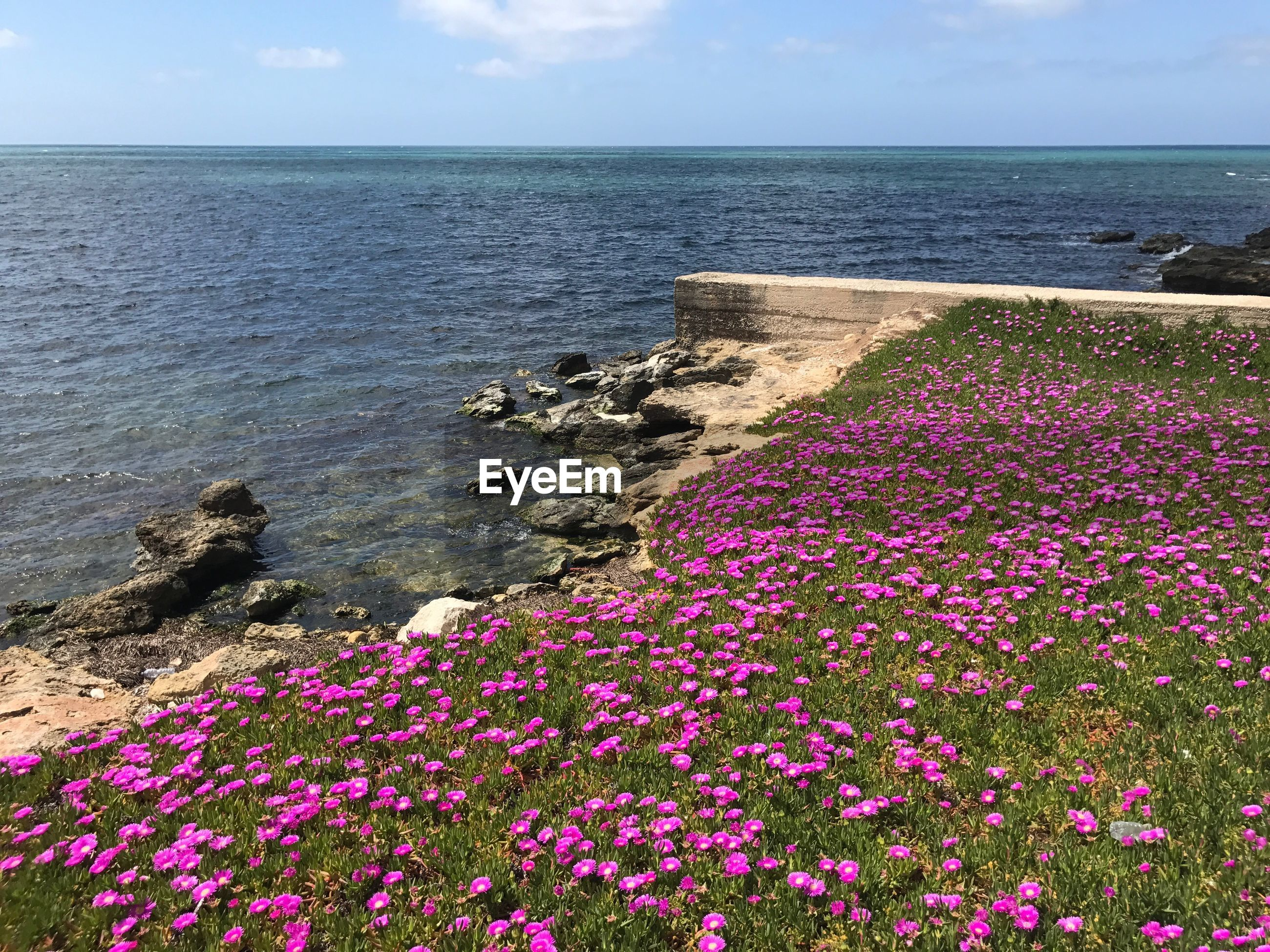 VIEW OF FLOWERS GROWING ON BEACH