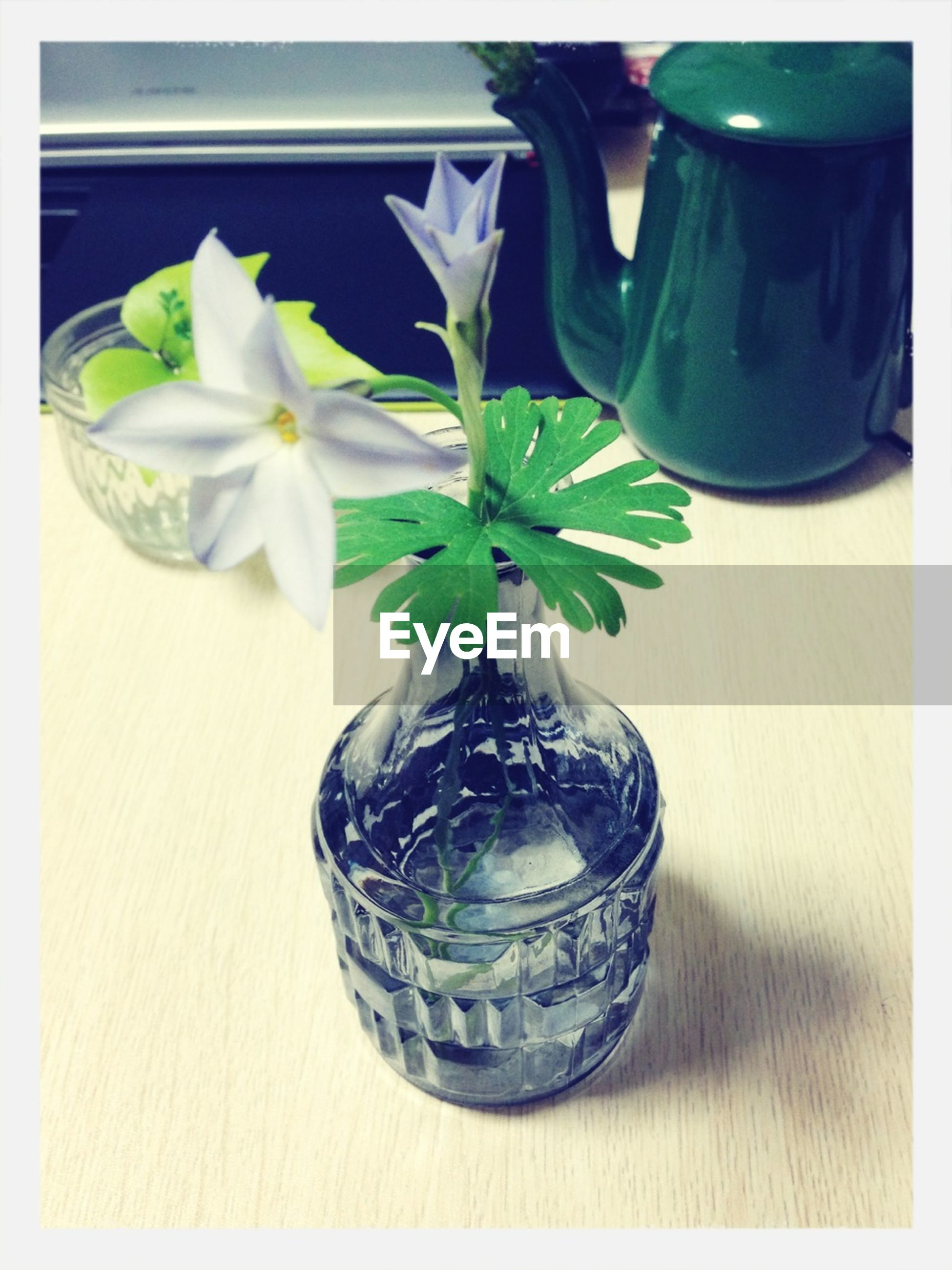 indoors, vase, transfer print, table, flower, freshness, auto post production filter, potted plant, still life, close-up, home interior, high angle view, fragility, plant, wood - material, decoration, glass - material, leaf, no people, flower arrangement