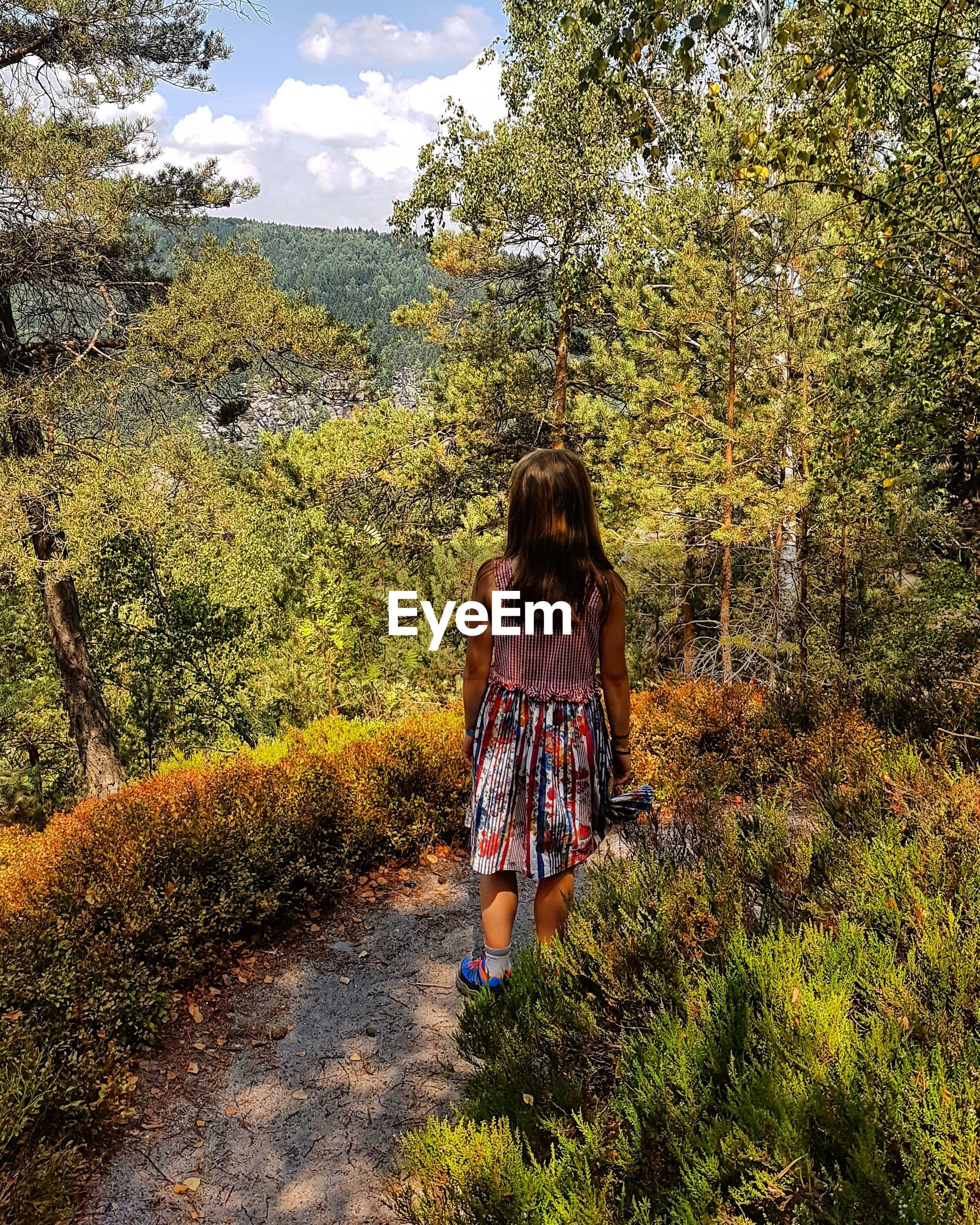 Rear view of girl standing on footpath in forest