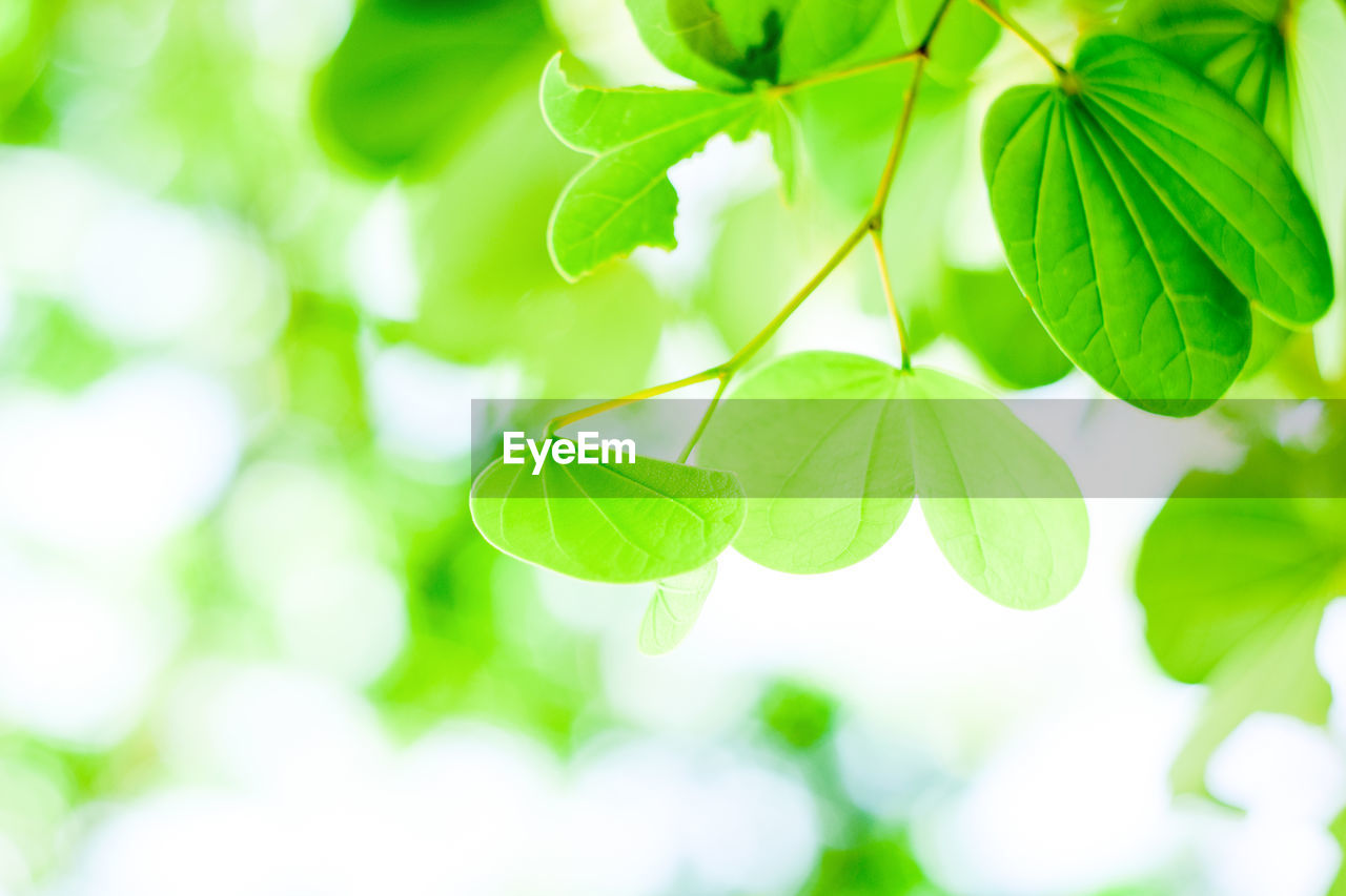 leaf, plant part, green color, growth, plant, close-up, beauty in nature, no people, nature, selective focus, focus on foreground, day, freshness, outdoors, fragility, vulnerability, leaves, low angle view, tranquility, tree