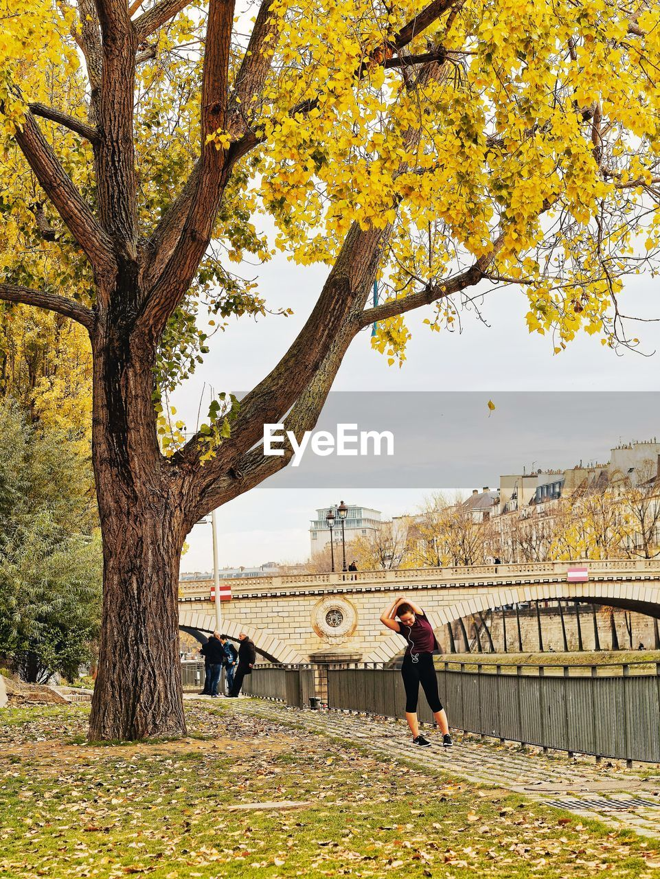 tree, plant, real people, autumn, lifestyles, nature, leisure activity, architecture, women, adult, built structure, full length, change, trunk, day, tree trunk, people, men, branch, plant part, outdoors, bridge - man made structure