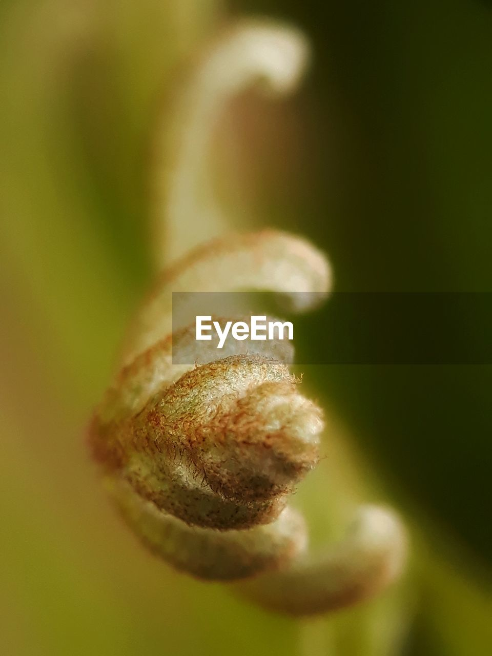 close-up, selective focus, growth, beauty in nature, no people, plant, vulnerability, nature, fragility, day, green color, beginnings, flower, focus on foreground, outdoors, freshness, spiral, tendril, plant stem, bud