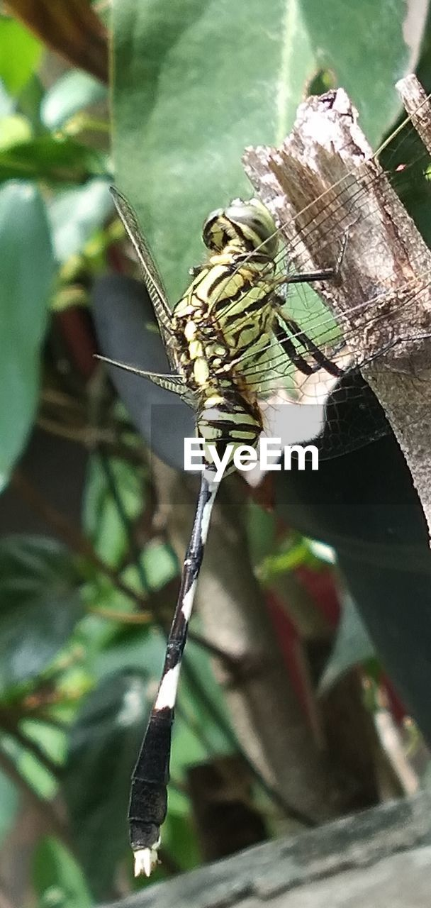 animal wildlife, animal themes, animals in the wild, animal, invertebrate, one animal, insect, close-up, focus on foreground, plant, day, nature, no people, animal wing, outdoors, tree, sunlight, animal body part, plant part, leaf