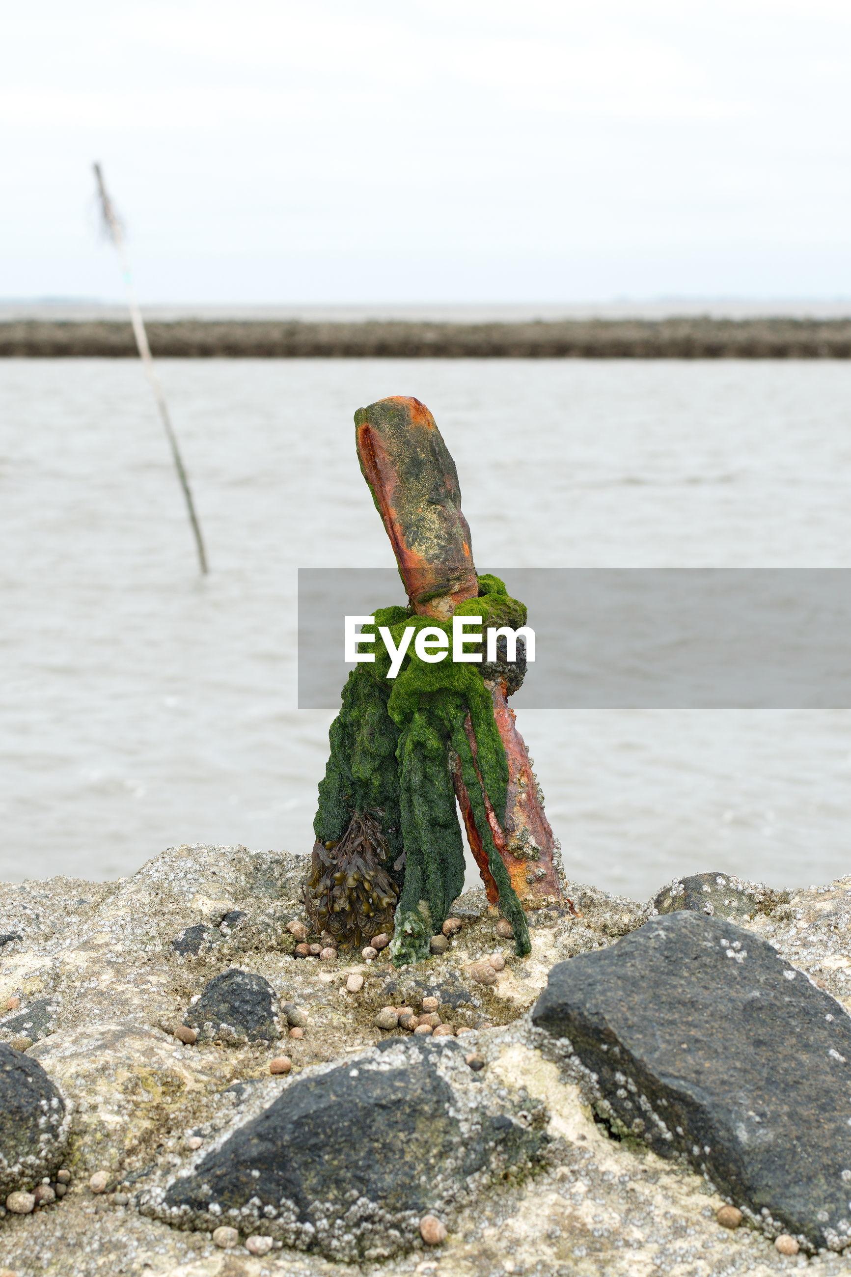 CLOSE-UP OF ROCKS ON SHORE AT BEACH