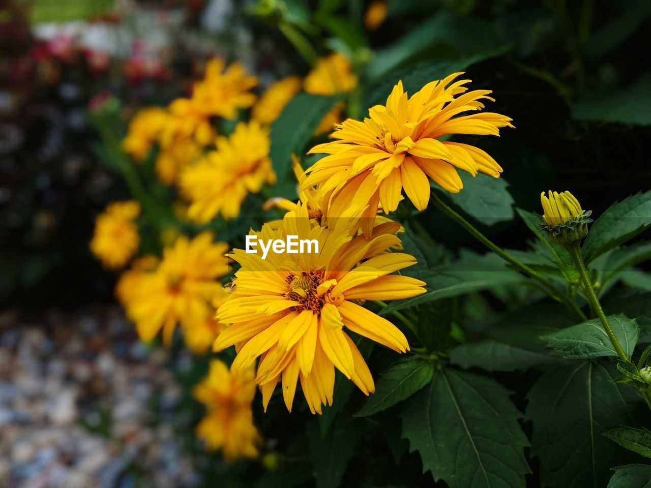 flowering plant, flower, fragility, vulnerability, freshness, beauty in nature, petal, plant, yellow, growth, flower head, inflorescence, close-up, focus on foreground, nature, day, plant part, leaf, outdoors, no people, pollen, gazania