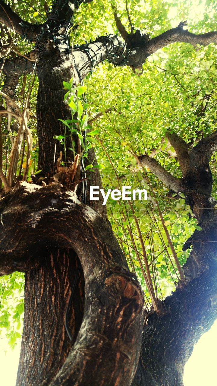 tree, tree trunk, nature, growth, branch, day, outdoors, forest, beauty in nature, no people, close-up