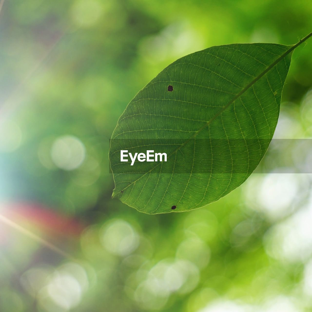 leaf, plant part, green color, close-up, plant, growth, day, focus on foreground, nature, beauty in nature, no people, selective focus, outdoors, leaf vein, tranquility, vulnerability, fragility, freshness, leaves, lens flare