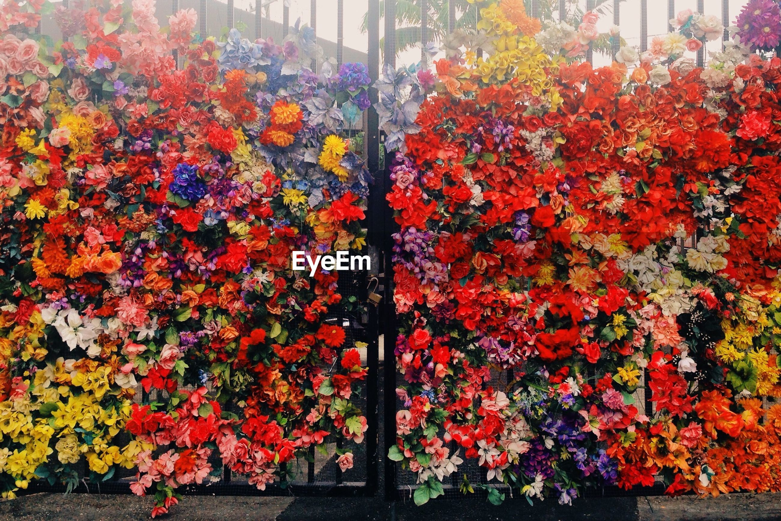Multi colored flowers on gate