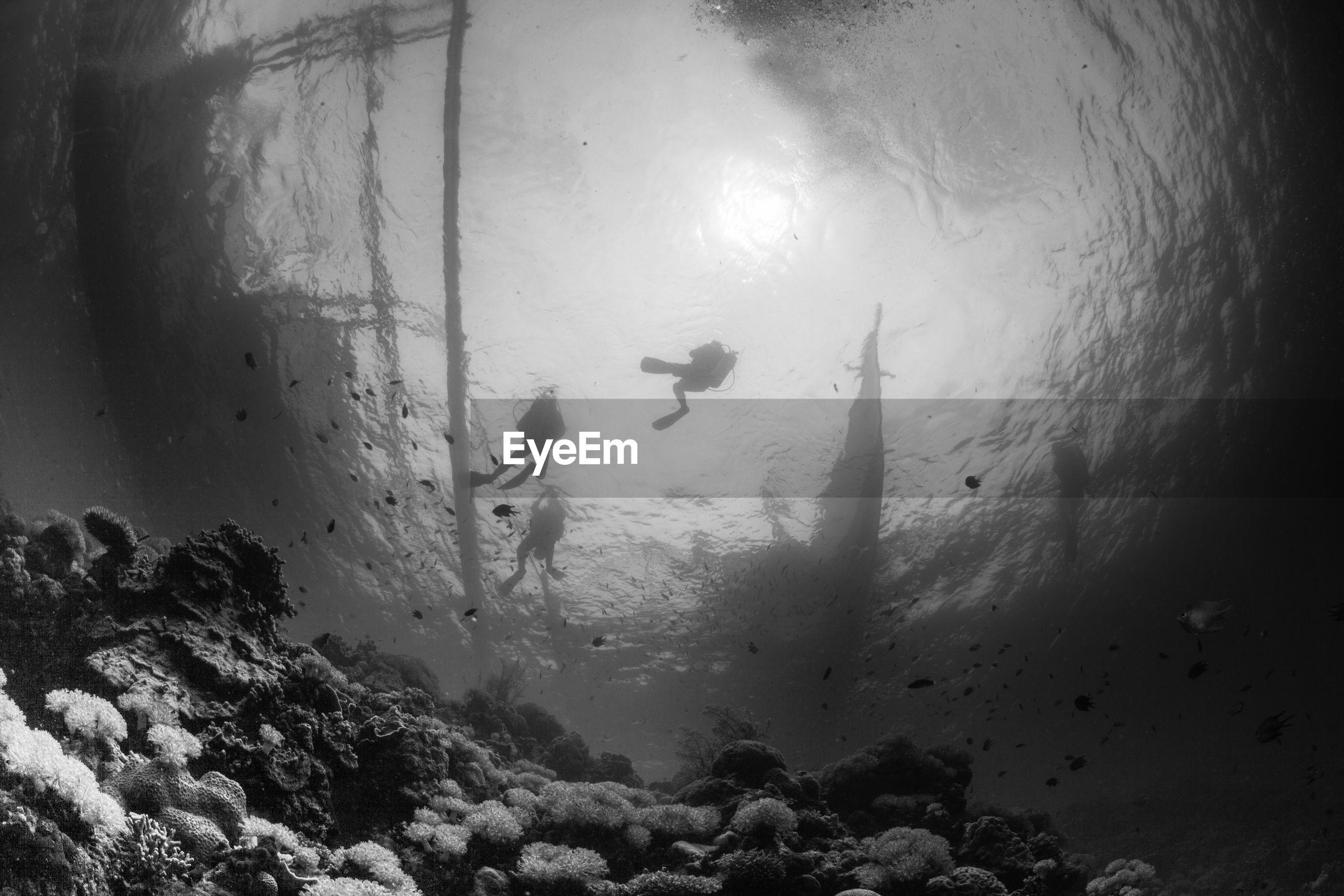 Scuba divers swimming underwater