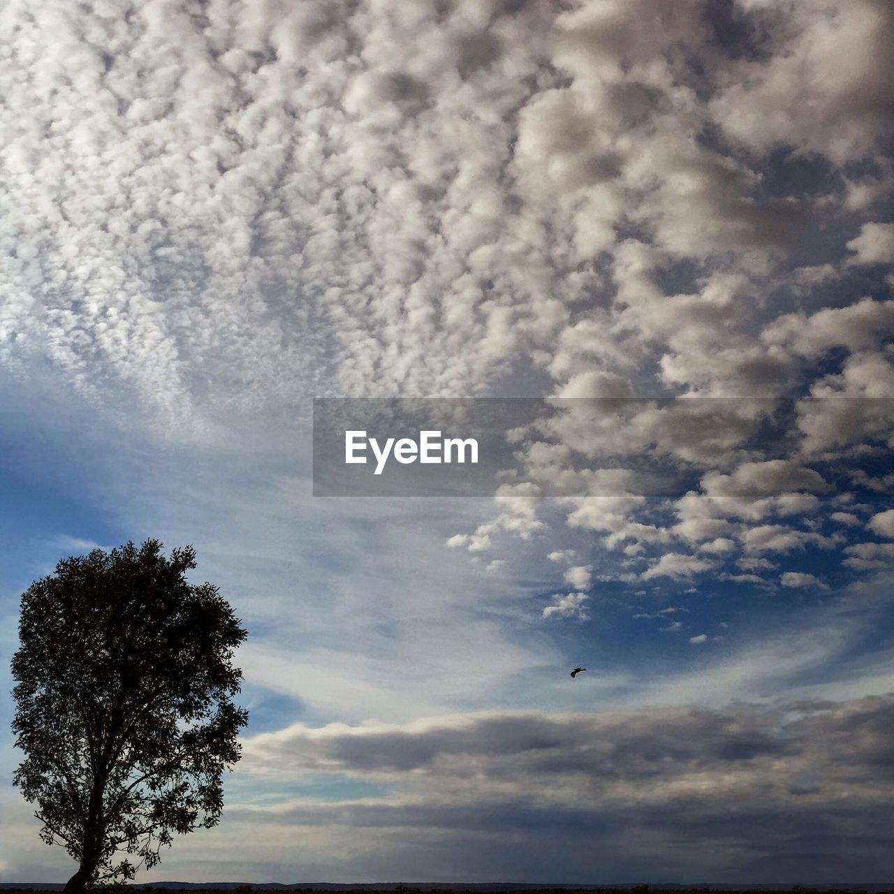 sky, cloud - sky, low angle view, nature, beauty in nature, flying, tree, no people, day, scenics, outdoors, tranquility