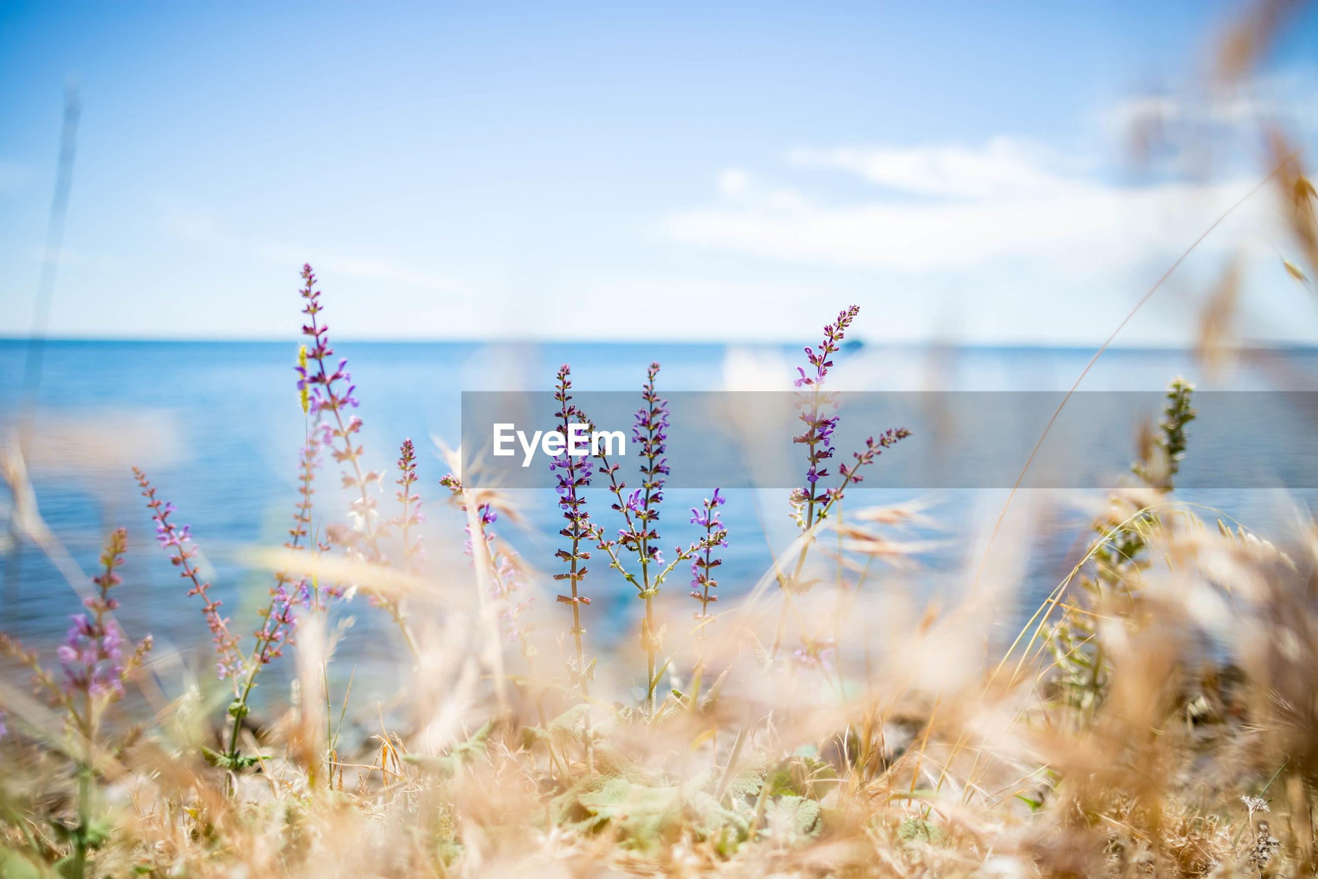 Flowering Plants By Sea Against Sky