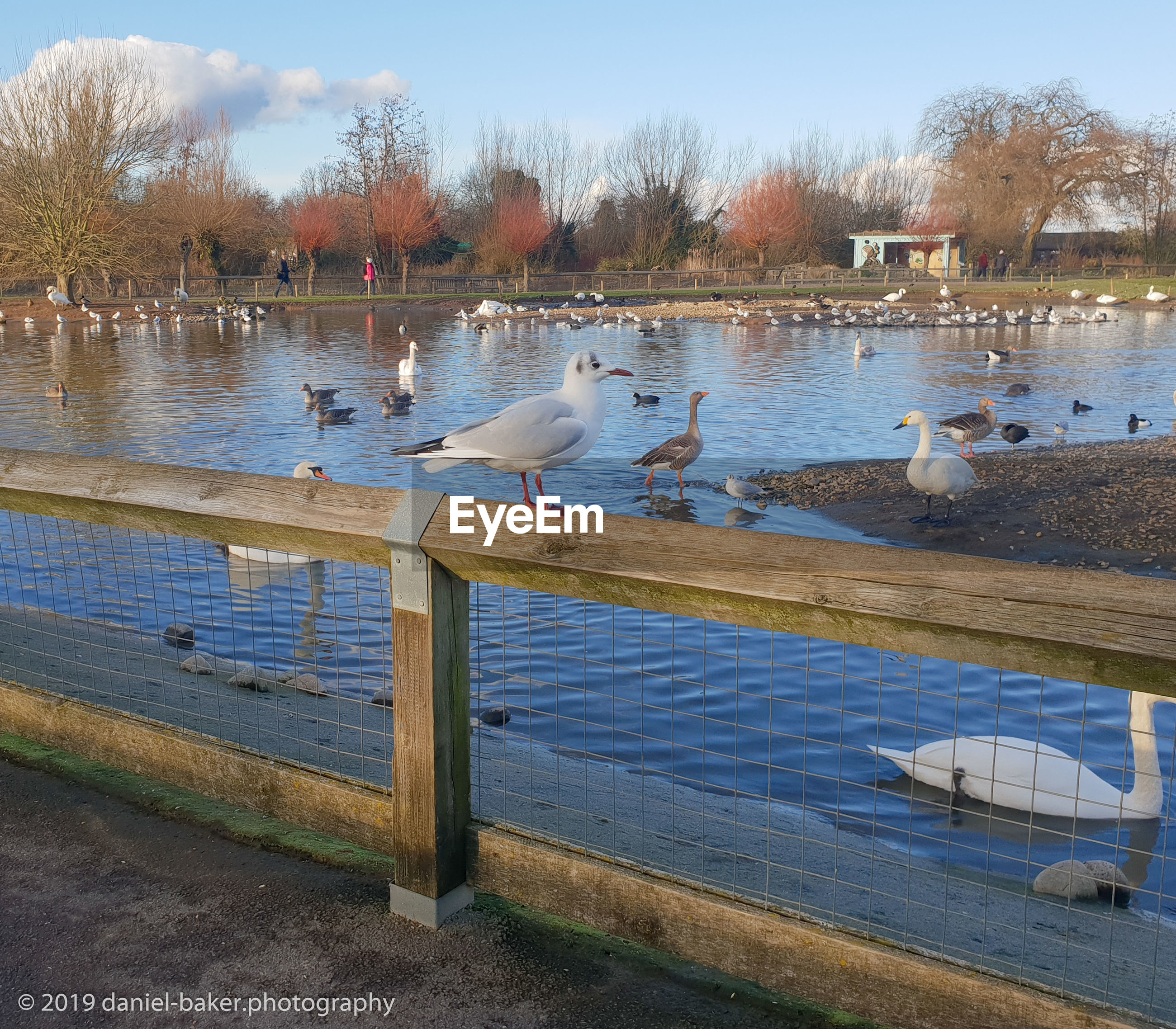 animals in the wild, bird, water, animal wildlife, group of animals, vertebrate, animal themes, animal, lake, large group of animals, nature, tree, sky, perching, day, no people, beauty in nature, plant, wood - material, flock of birds, outdoors, duck, seagull