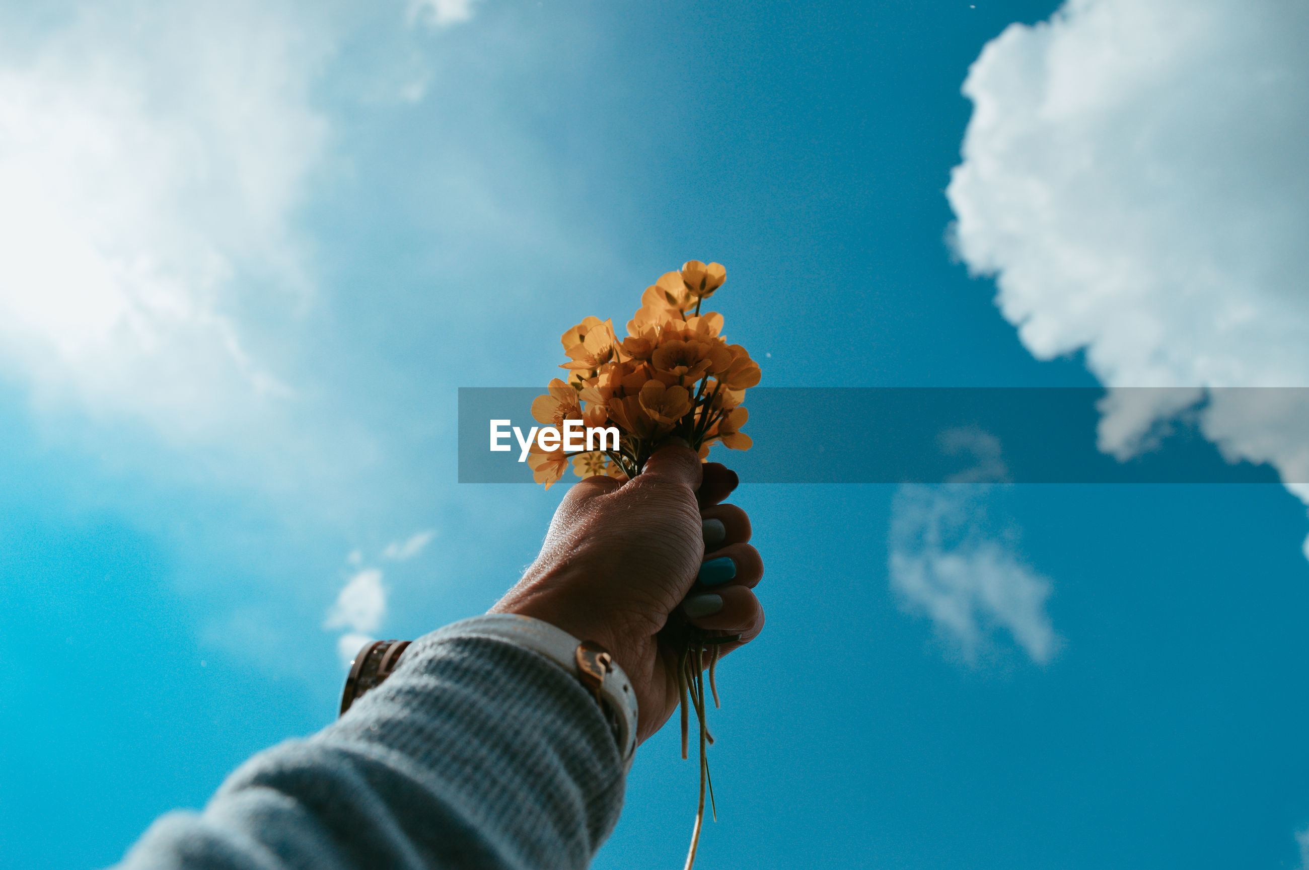 Low angle view of person hand holding flowers against sky