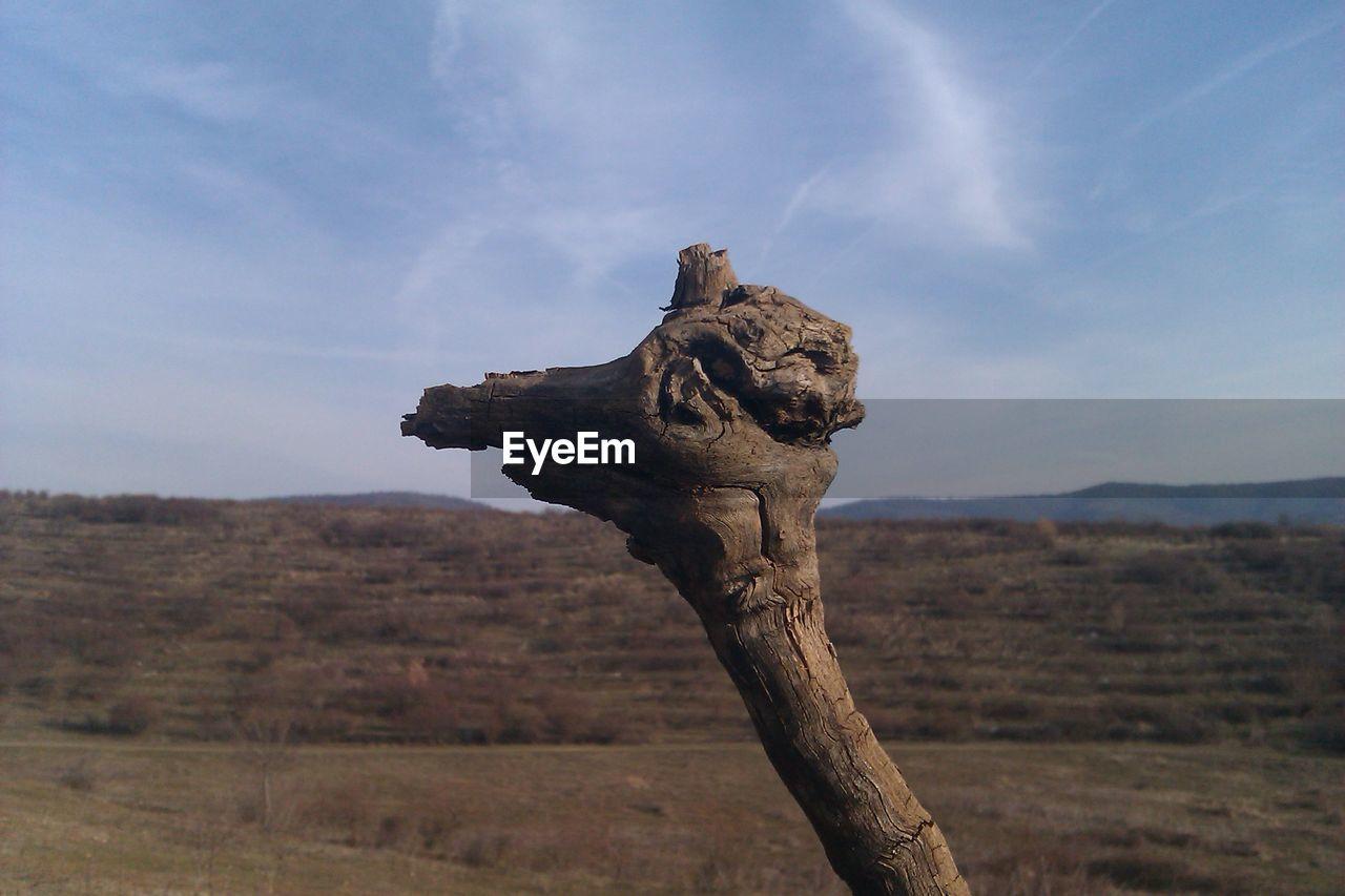 CLOSE-UP OF ELEPHANT AGAINST SKY
