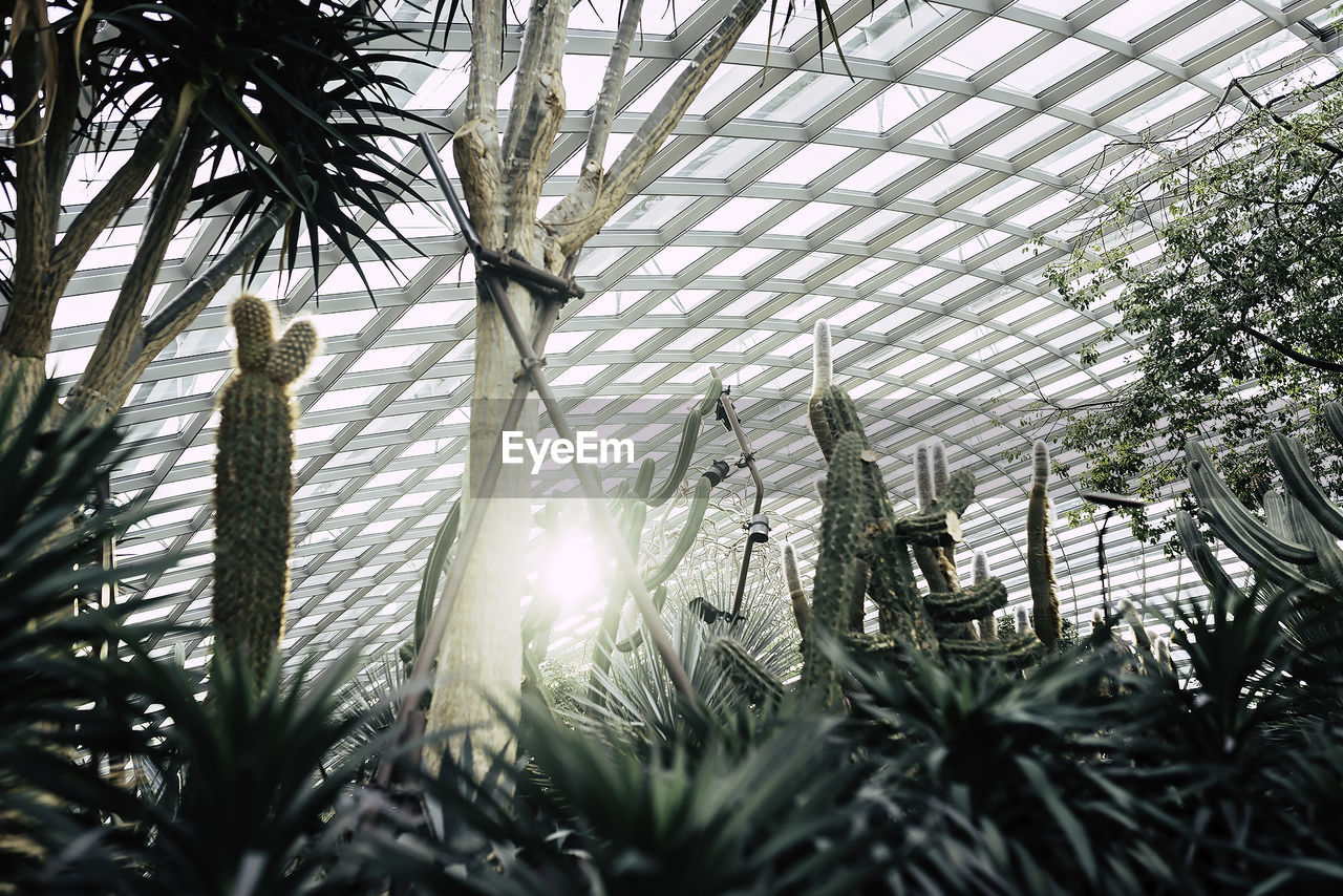 growth, tree, plant, nature, day, no people, palm tree, leaf, branch, outdoors, beauty in nature, animal themes, greenhouse, close-up