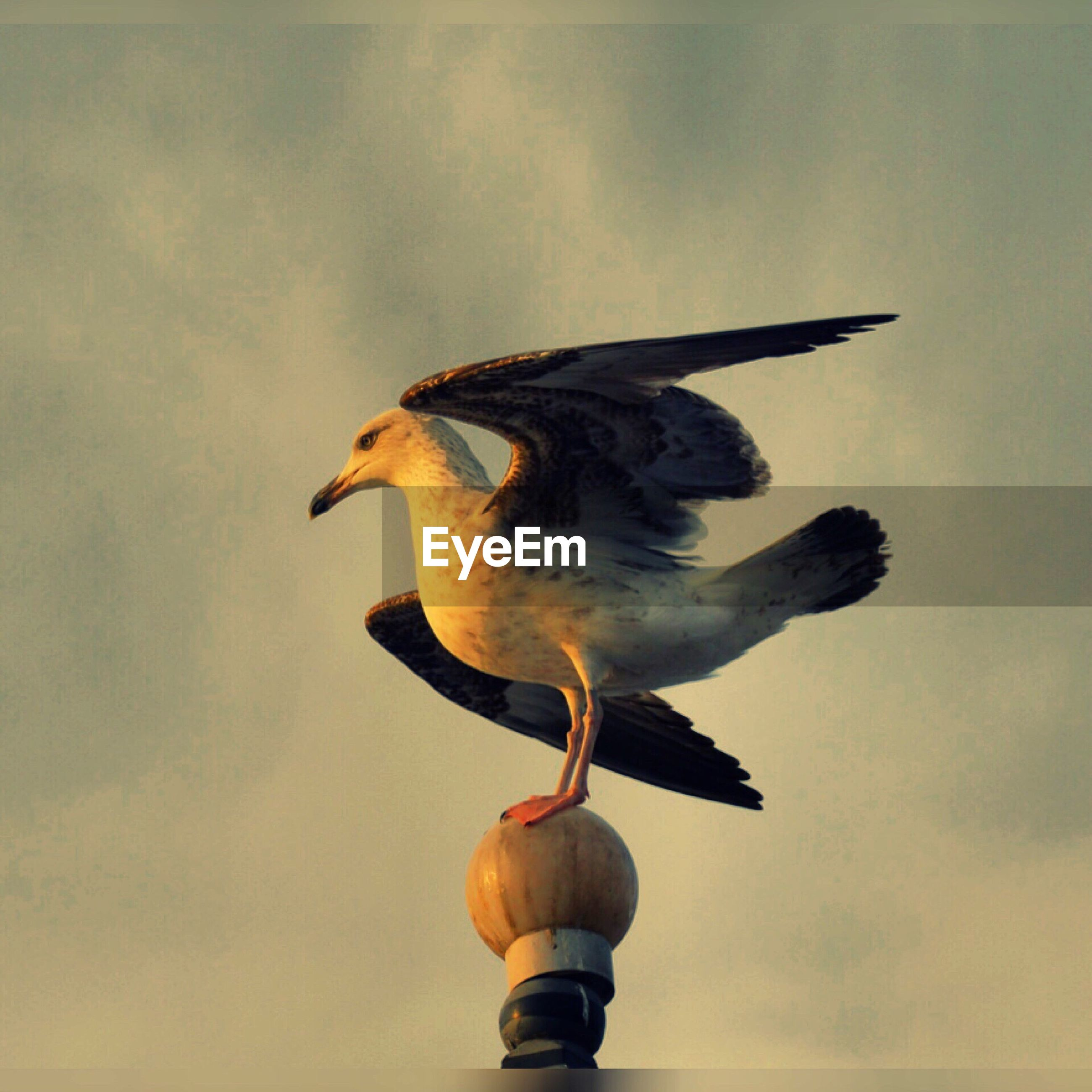 animal themes, bird, one animal, animals in the wild, sky, low angle view, spread wings, wildlife, sculpture, statue, flying, cloud - sky, art and craft, art, animal representation, perching, outdoors, cloudy, seagull, no people