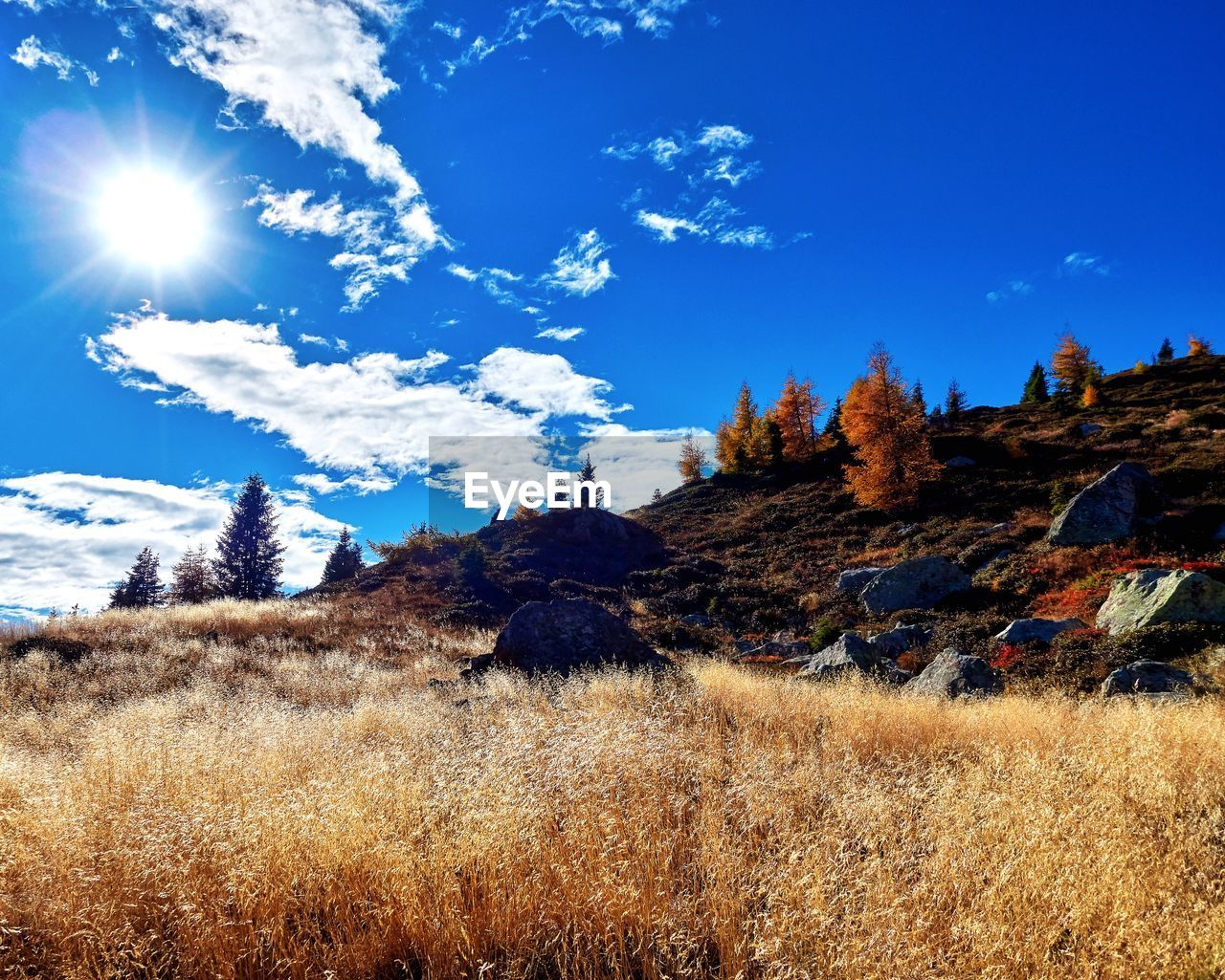 sky, plant, land, beauty in nature, tranquil scene, cloud - sky, landscape, tranquility, nature, scenics - nature, sunlight, grass, environment, field, no people, blue, non-urban scene, day, tree, mountain, outdoors, lens flare, bright