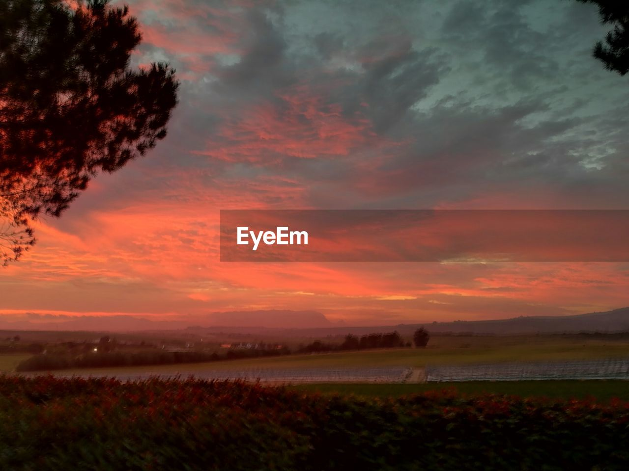 sunset, nature, beauty in nature, tranquility, tranquil scene, scenics, orange color, agriculture, sky, field, rural scene, growth, cloud - sky, landscape, outdoors, no people, tree, water, day