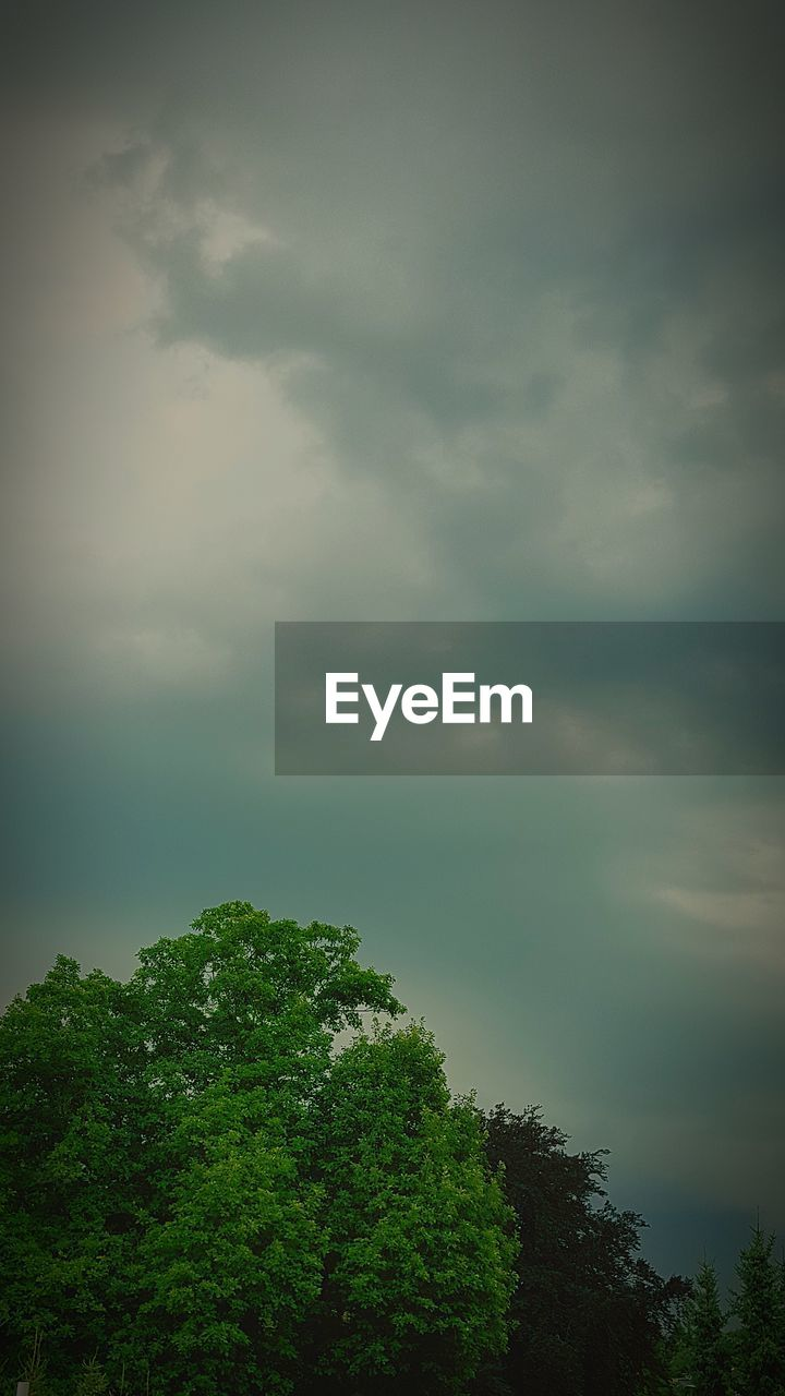 tree, sky, nature, beauty in nature, cloud - sky, tranquility, green color, scenics, no people, low angle view, tranquil scene, day, outdoors, growth, storm cloud