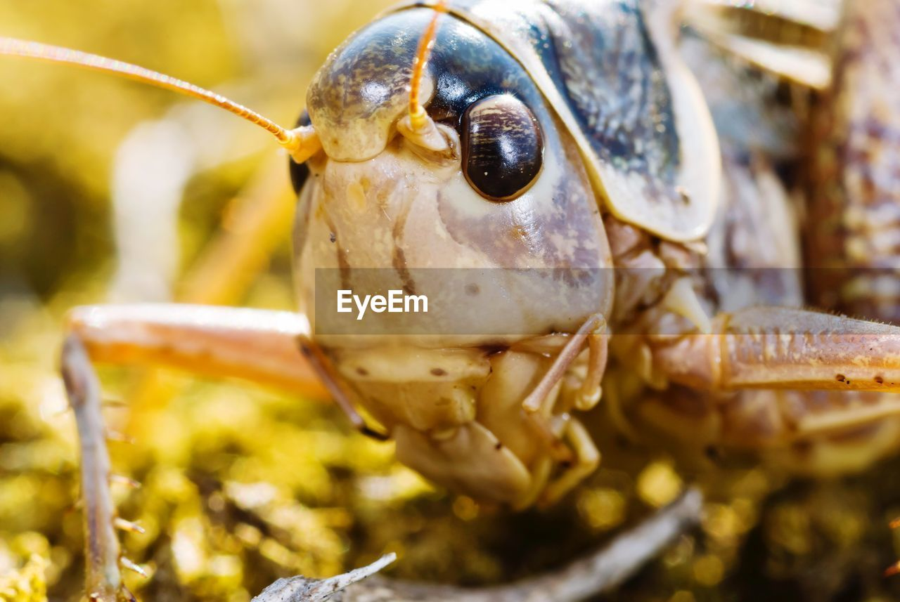 close-up, animal, one animal, animal themes, animals in the wild, selective focus, animal wildlife, no people, animal body part, day, food, food and drink, invertebrate, insect, animal antenna, nature, crustacean, outdoors, seafood, vertebrate, animal eye