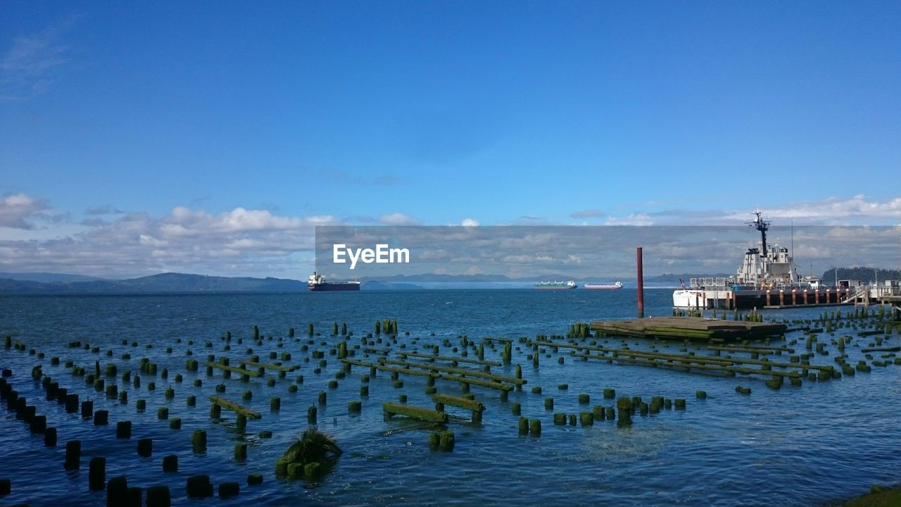 Old dock pilings in the puget sound