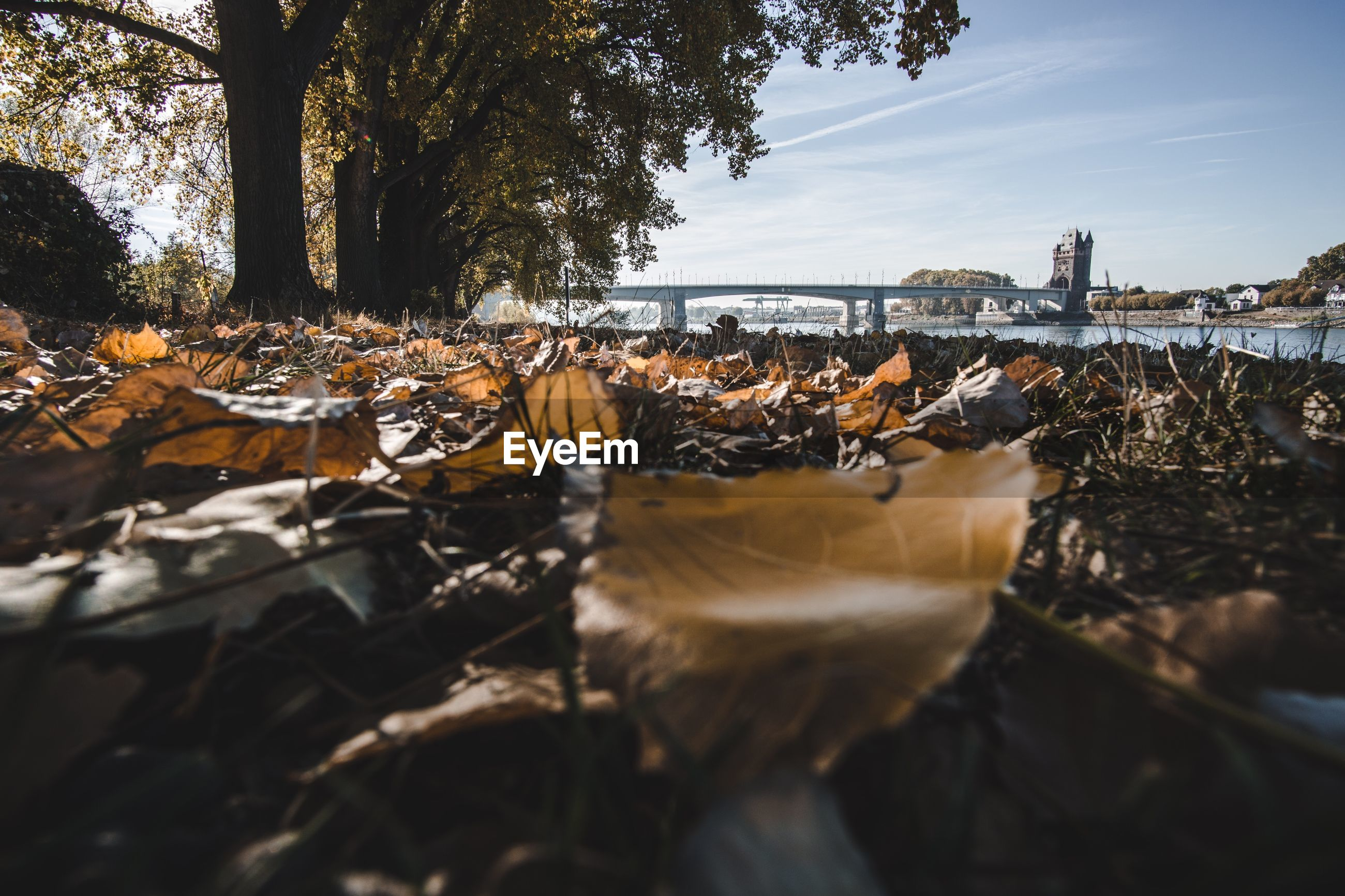 SURFACE LEVEL OF DRY LEAVES IN CITY