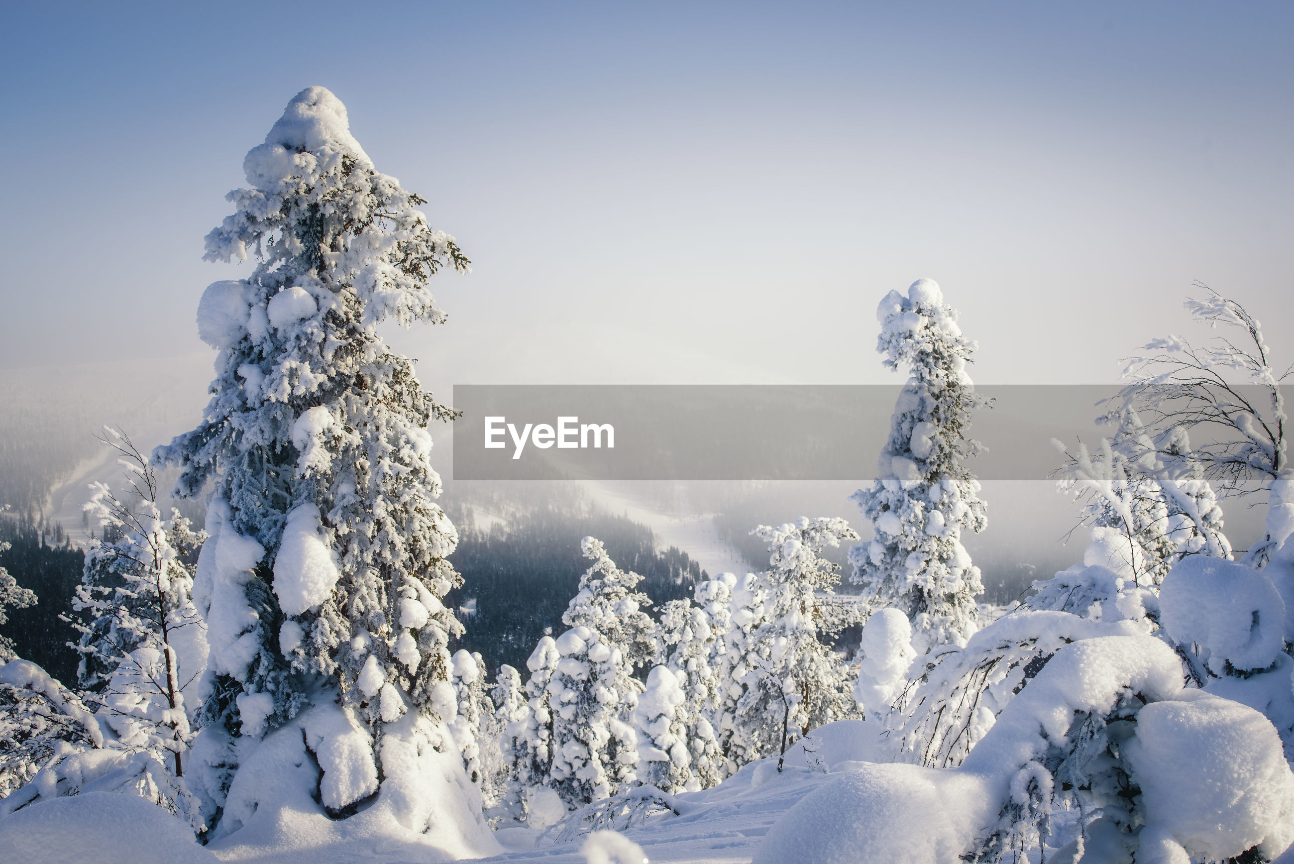 Scenic view of snow covered tree on mountain against sky