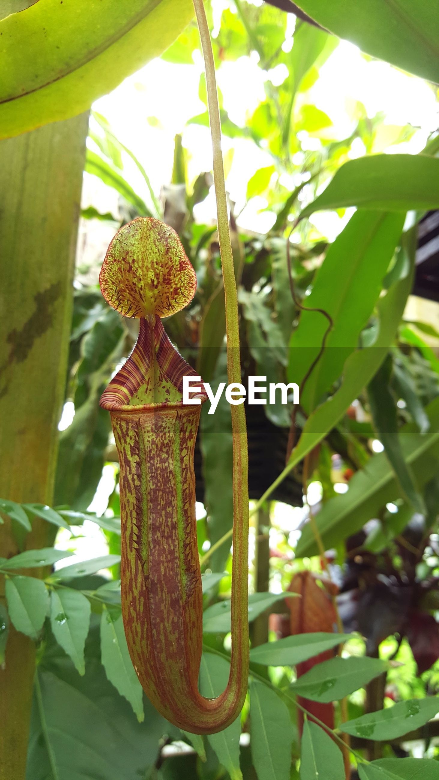 Low angle view of plant growing on tree