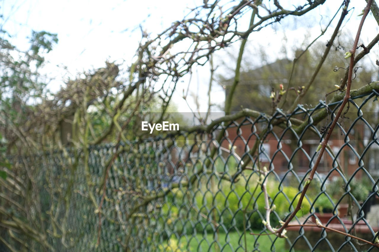 chainlink fence, focus on foreground, no people, outdoors, sky, day, tree, nature, close-up