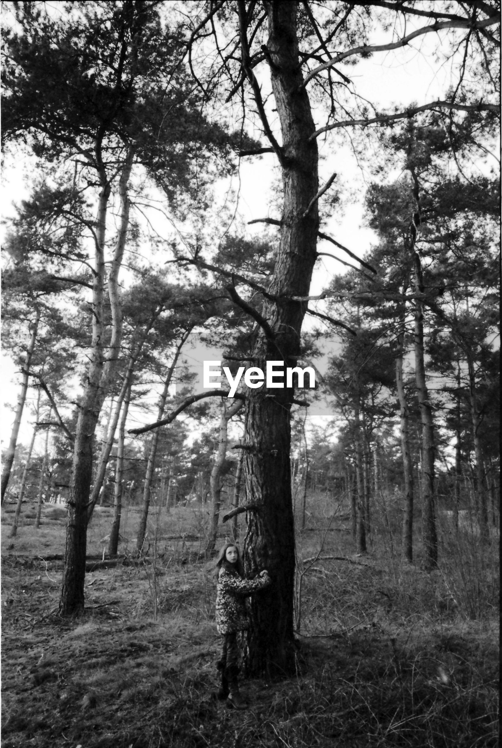Girl standing by bare tree in forest