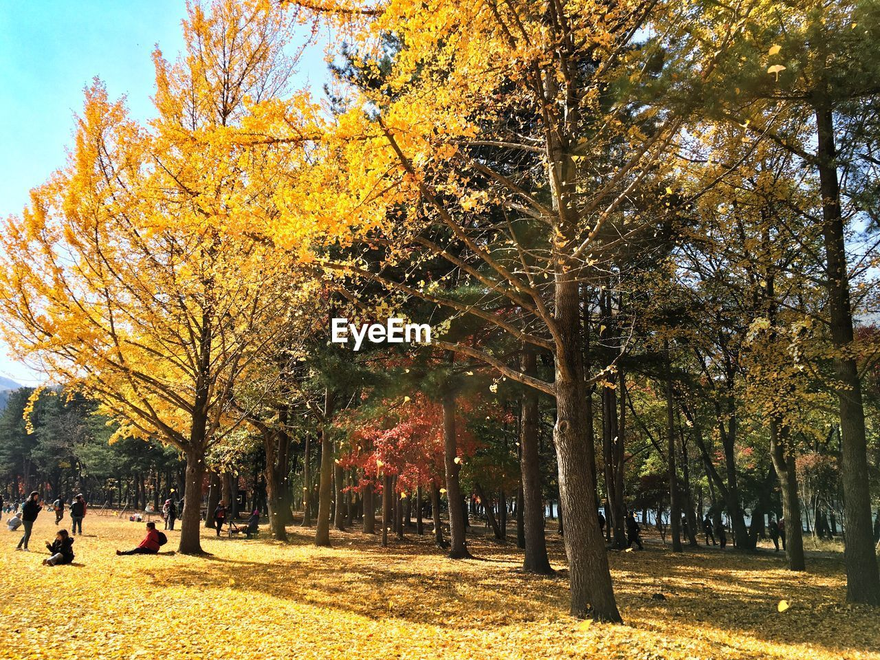 autumn, change, tree, leaf, nature, beauty in nature, tranquility, outdoors, growth, scenics, day, yellow, branch, real people, sky