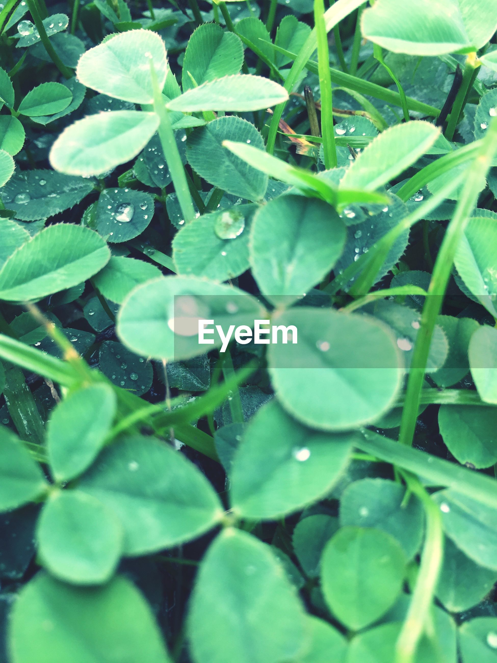 leaf, green color, growth, plant, full frame, nature, drop, backgrounds, freshness, day, outdoors, beauty in nature, water, no people, fragility, close-up