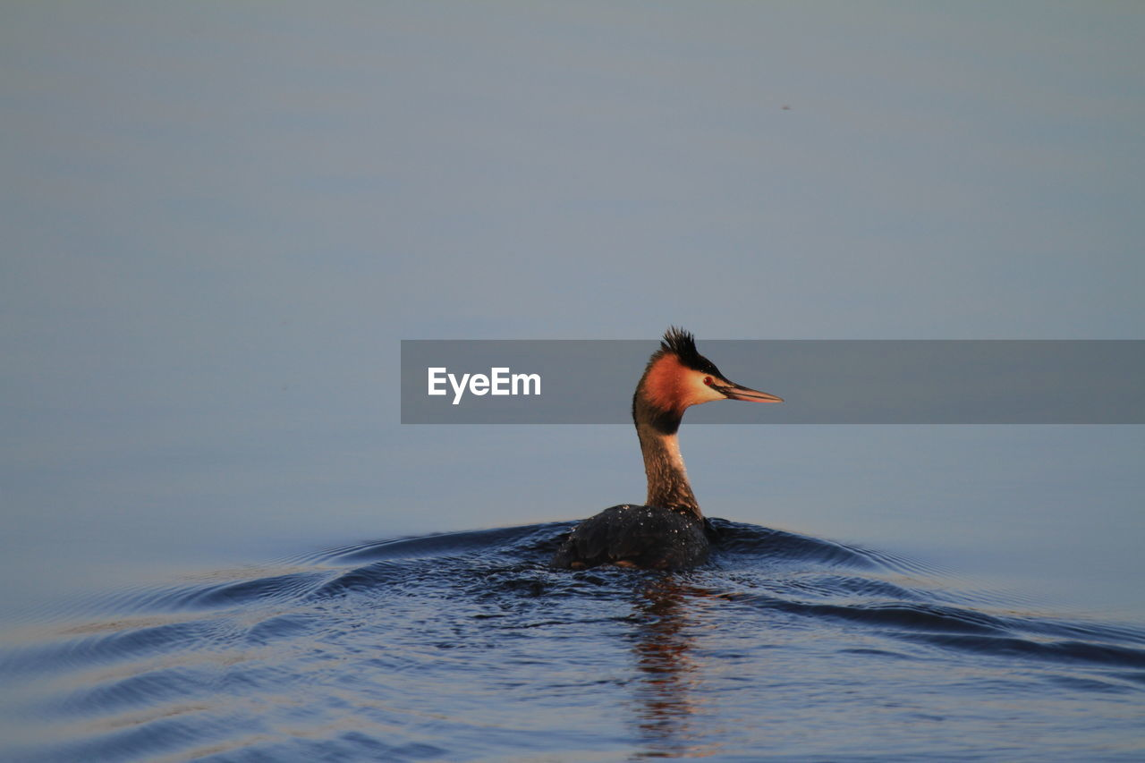 Bird Swimming In Water Against Sky
