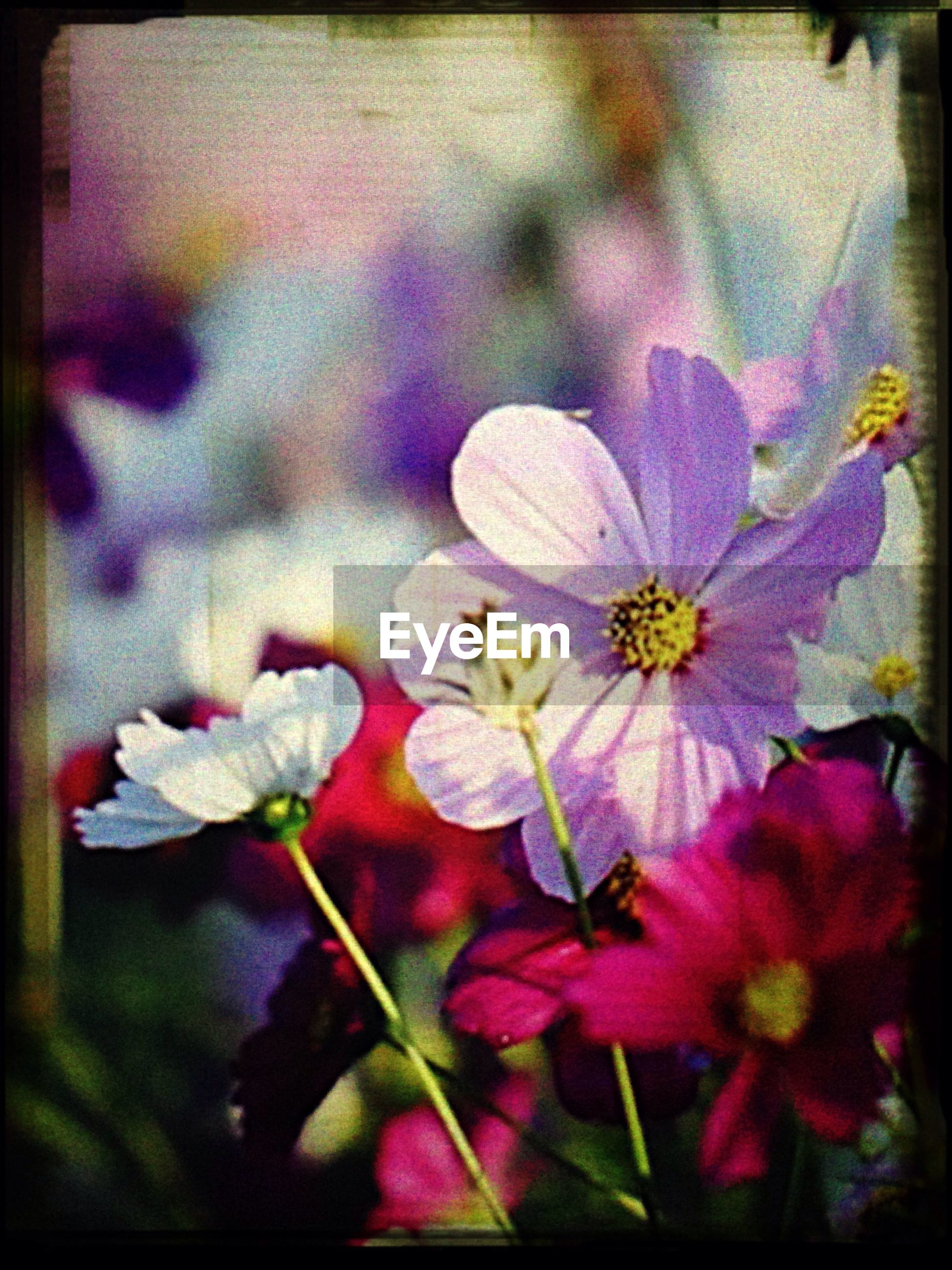 transfer print, flower, petal, auto post production filter, fragility, flower head, freshness, growth, beauty in nature, close-up, plant, blooming, nature, focus on foreground, selective focus, in bloom, leaf, pollen, day, single flower