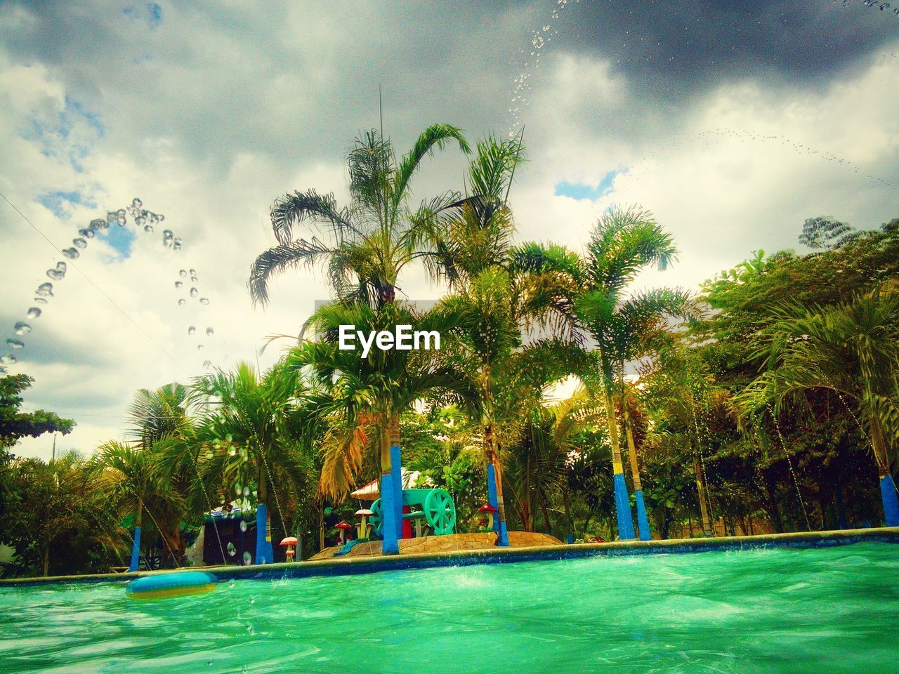 tree, palm tree, water, sky, swimming pool, growth, cloud - sky, beauty in nature, no people, nature, grass, day, outdoors