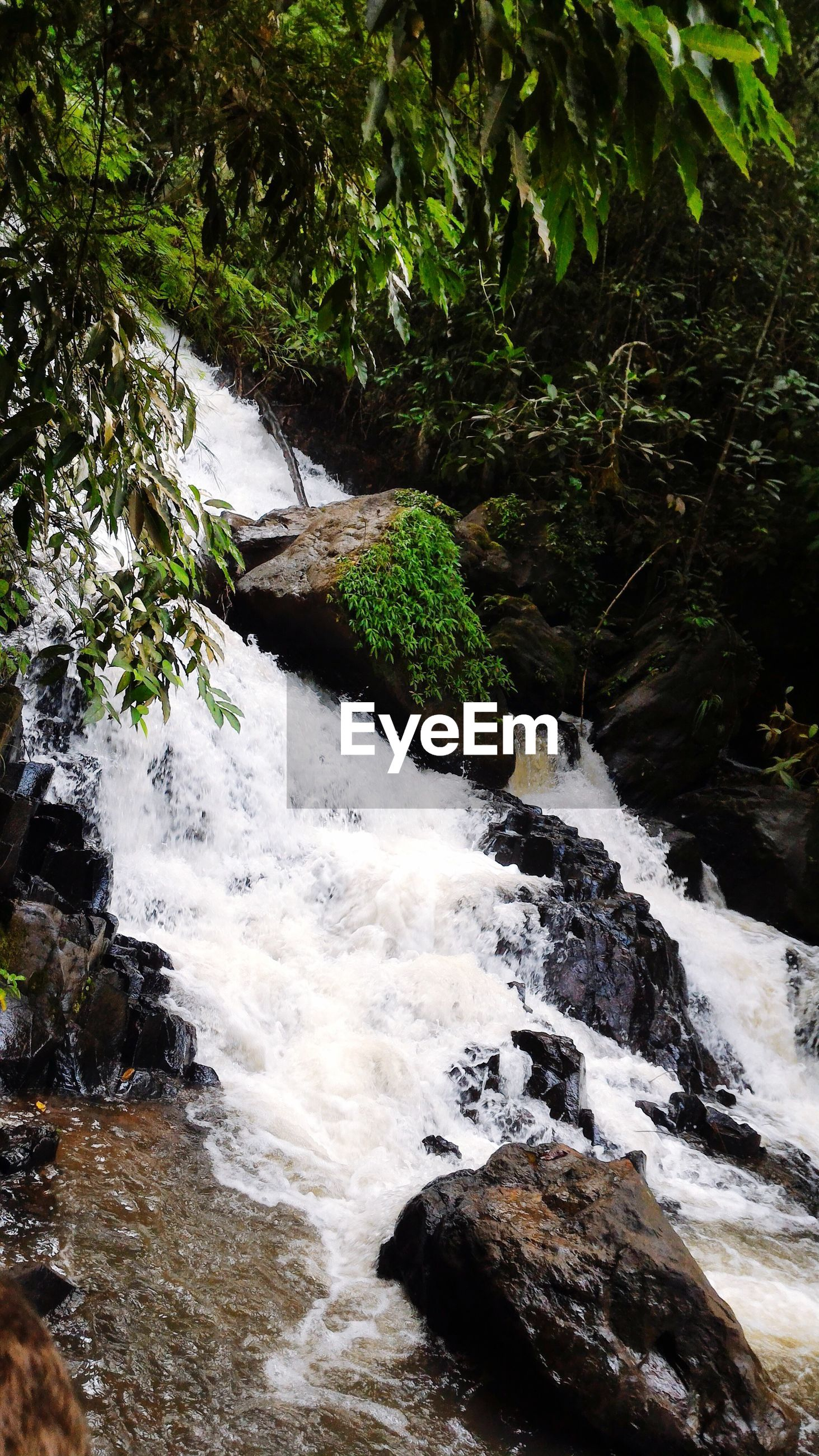 SCENIC VIEW OF WATER FLOWING IN FOREST