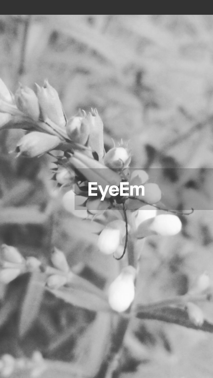 growth, plant, nature, flower, fragility, beauty in nature, petal, no people, close-up, freshness, day, outdoors, blooming, tree, flower head