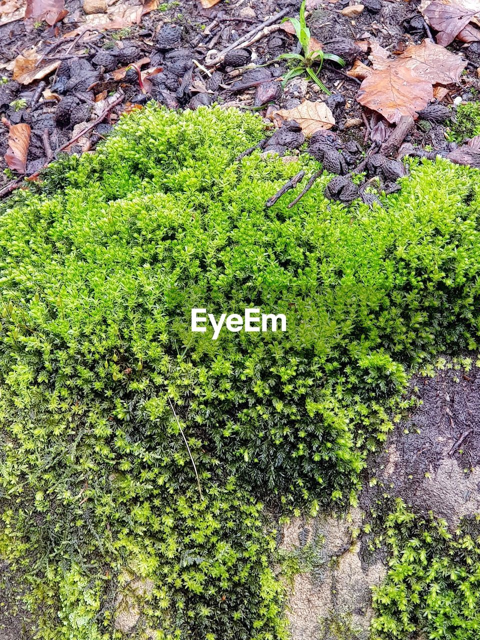 green color, growth, plant, day, nature, no people, high angle view, tranquility, beauty in nature, land, outdoors, field, plant part, leaf, rock, solid, rock - object, freshness, close-up, moss