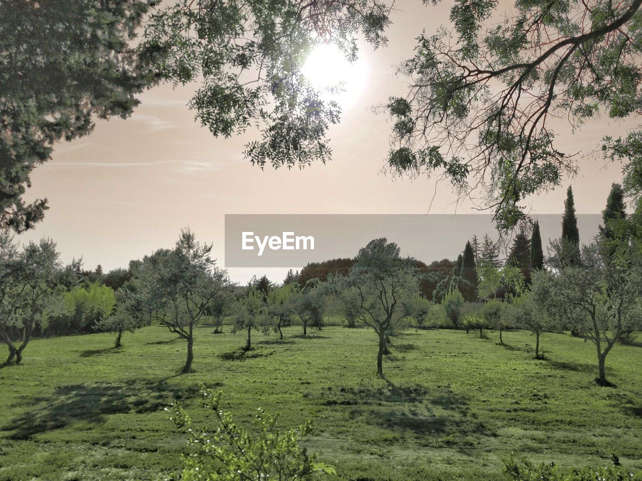 tree, plant, landscape, sky, scenics - nature, tranquility, beauty in nature, environment, growth, grass, tranquil scene, field, land, green color, nature, no people, day, rural scene, outdoors, agriculture