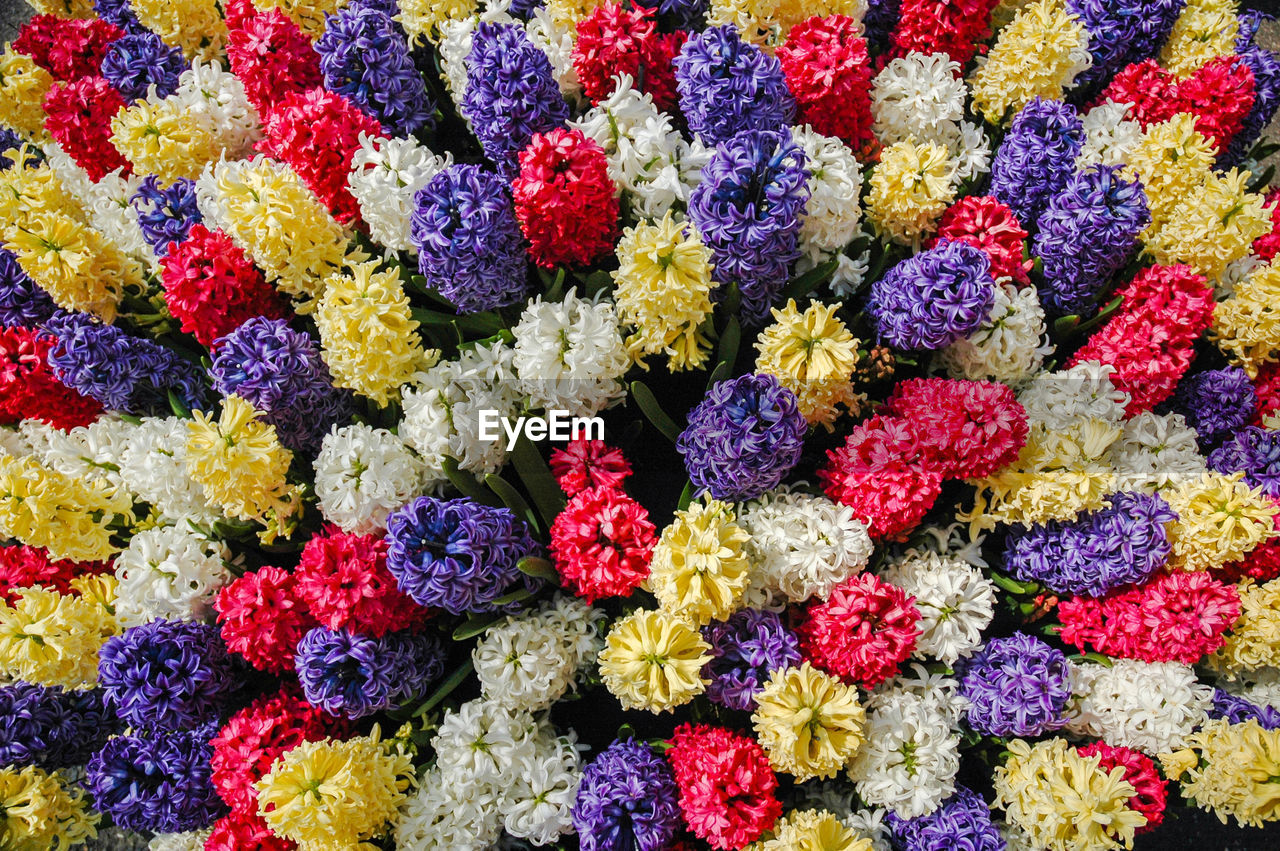 multi colored, full frame, flower, flowering plant, backgrounds, plant, close-up, no people, vulnerability, freshness, fragility, beauty in nature, nature, pattern, large group of objects, high angle view, variation, choice, day, flower head, floral pattern, flower arrangement