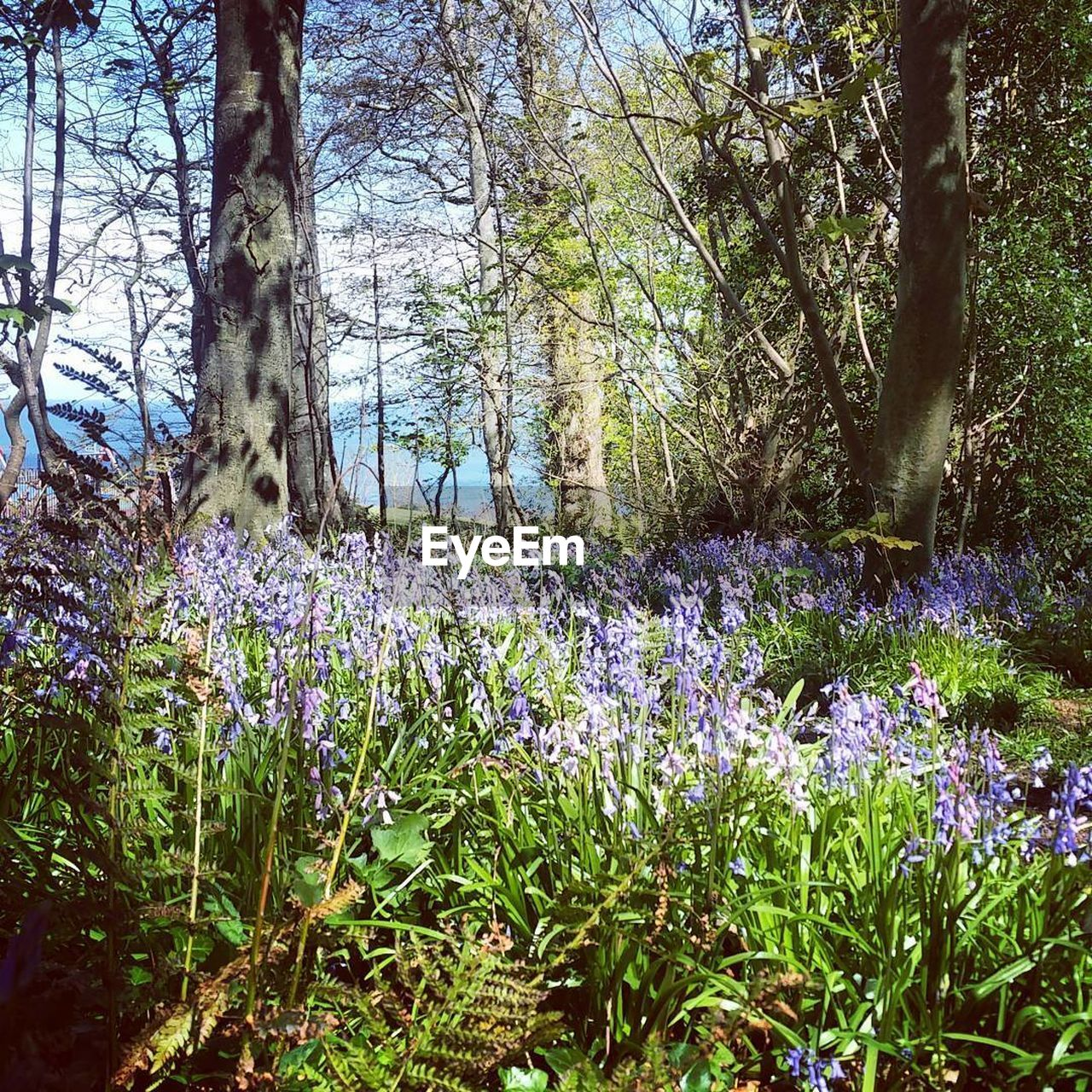 growth, nature, tree, flower, beauty in nature, tranquility, day, tranquil scene, tree trunk, plant, forest, no people, outdoors, scenics, fragility, landscape, branch, grass, freshness, crocus