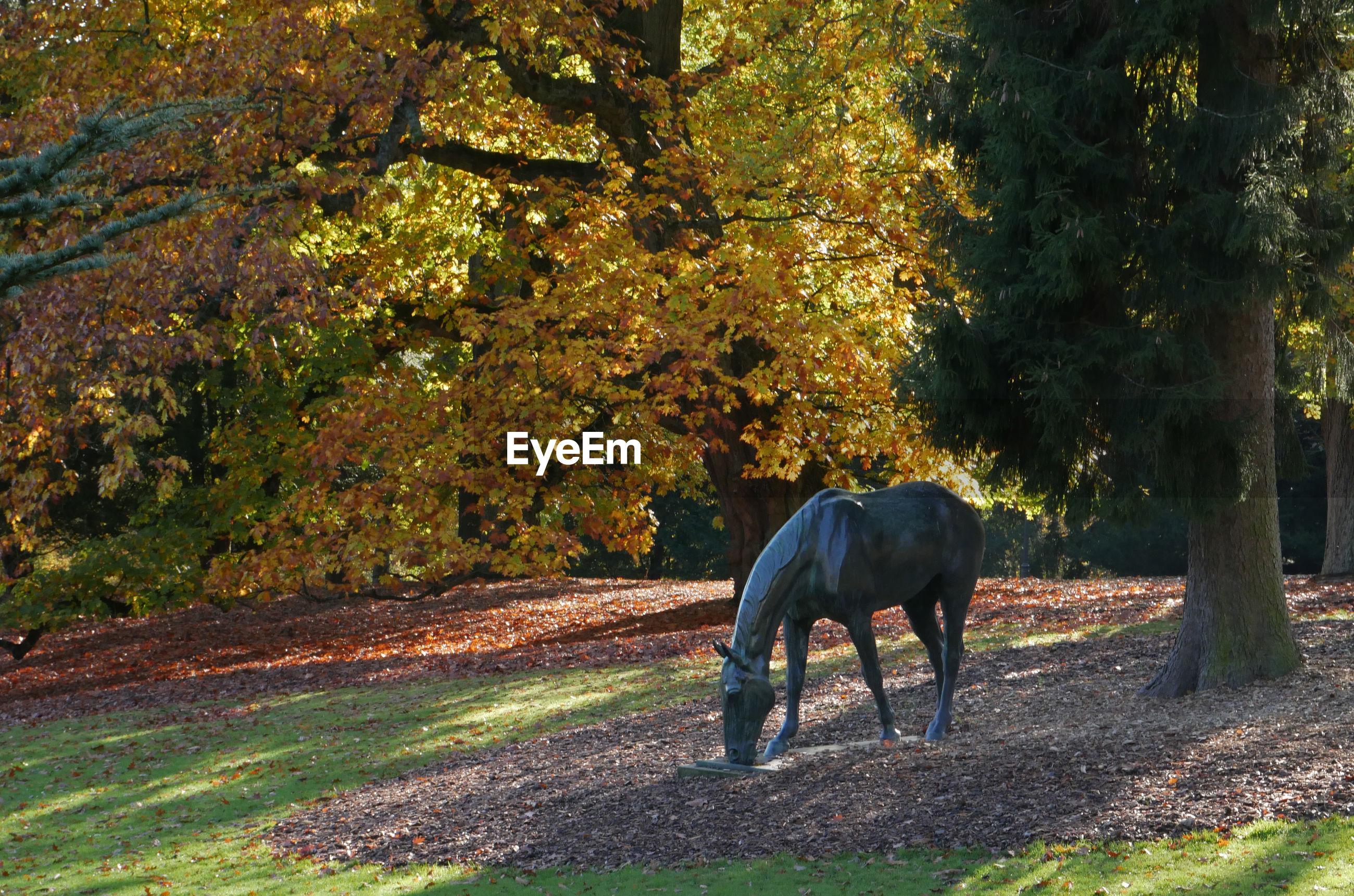 Sculpture of horse standing in the park of villa hügel