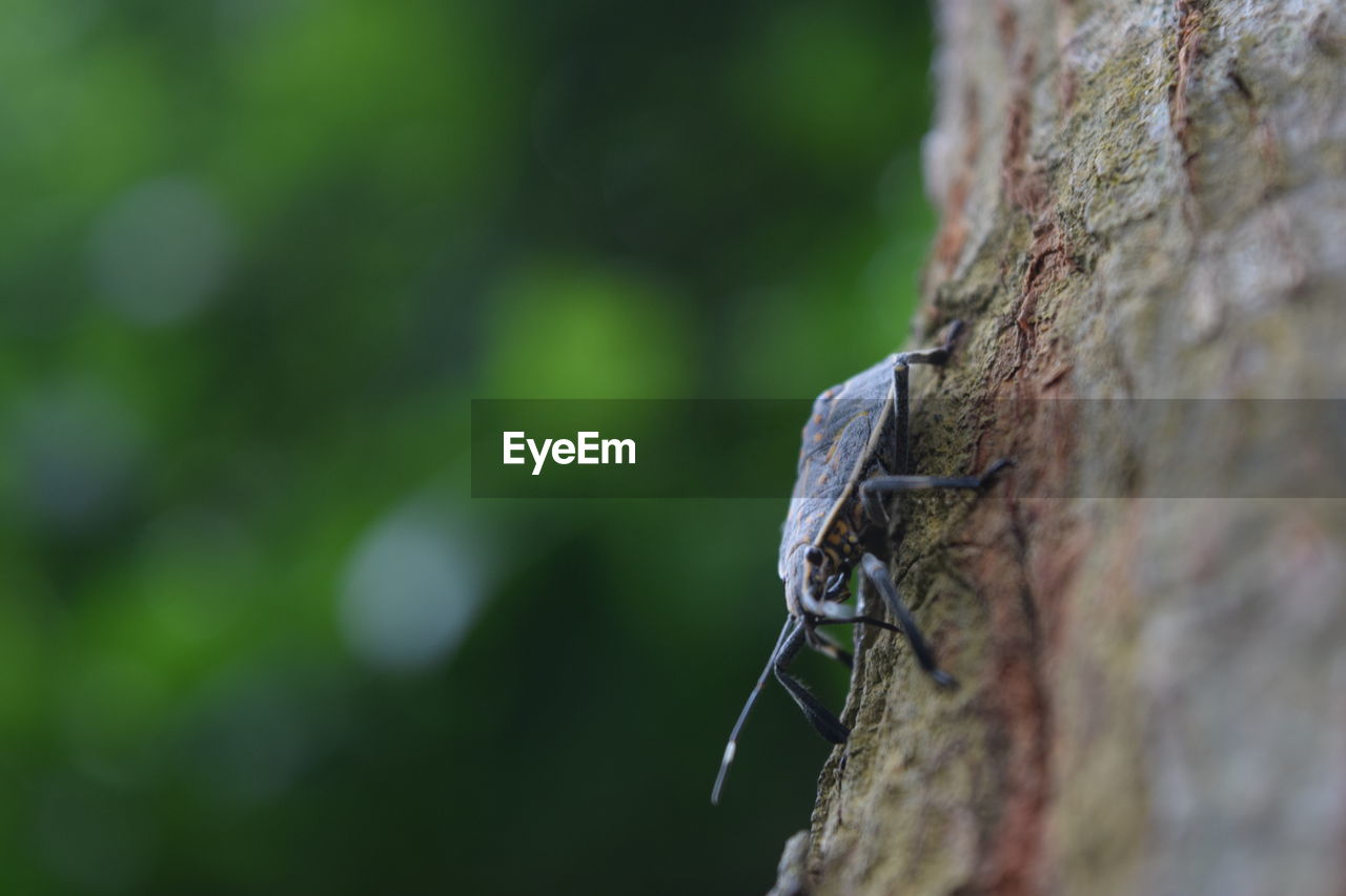 one animal, animal wildlife, animals in the wild, animal themes, animal, selective focus, close-up, day, invertebrate, no people, focus on foreground, insect, nature, wall, outdoors, brick wall, wall - building feature, brick, plant, animal body part