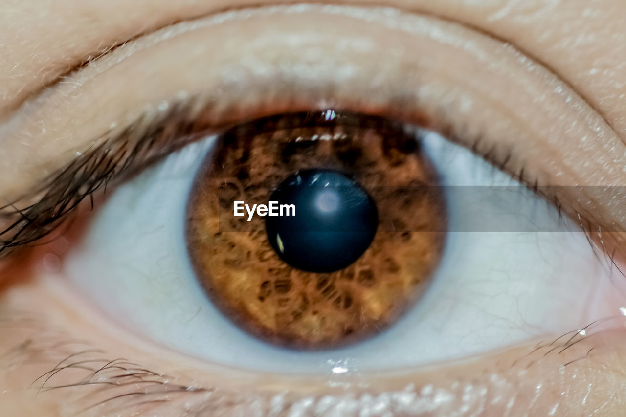 eyesight, sensory perception, eyelash, extreme close-up, eye, iris - eye, close-up, body part, human eye, macro, human body part, eyeball, one person, full frame, unrecognizable person, real people, eyelid, selective focus, looking at camera, eyebrow, human face